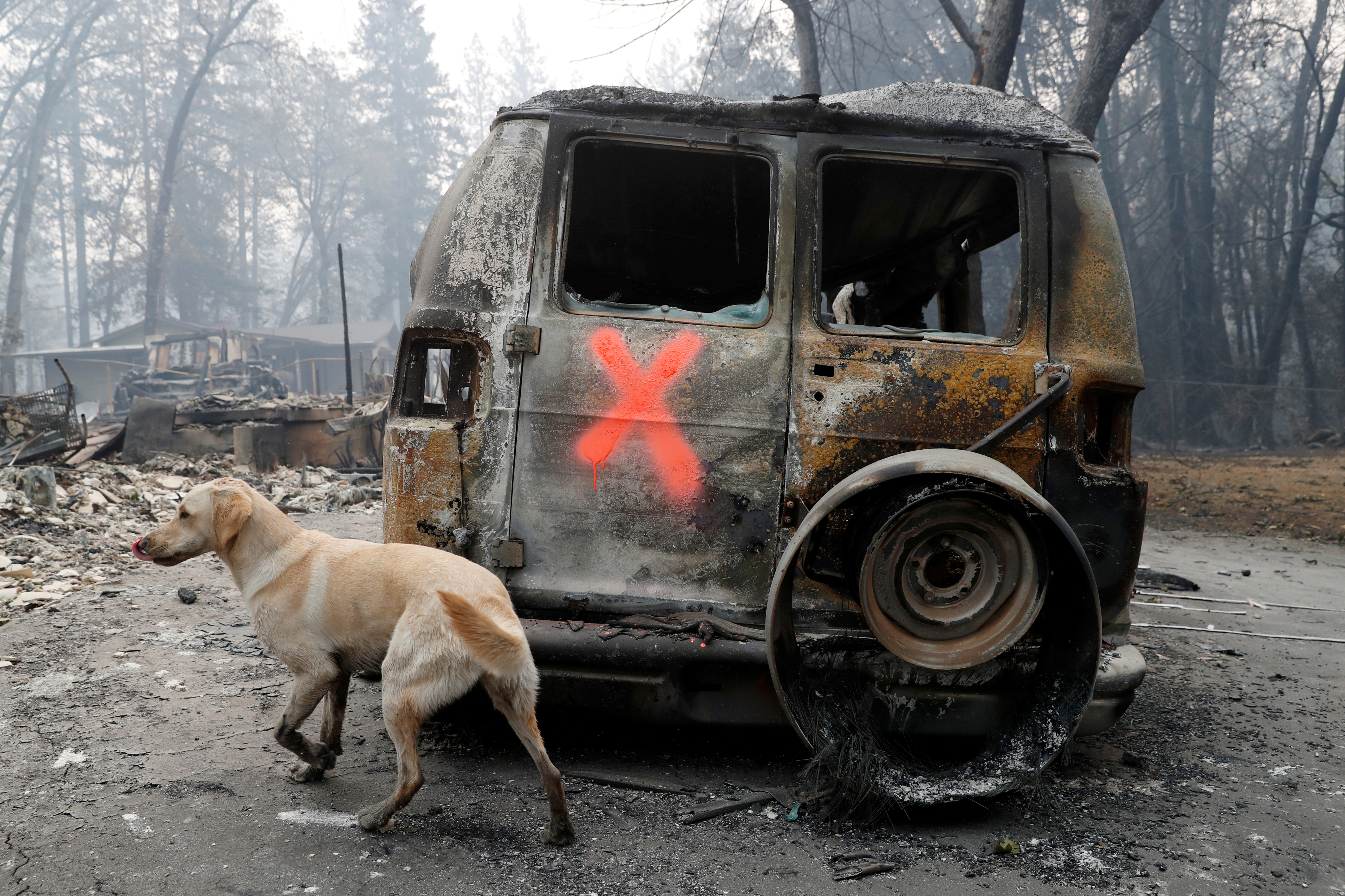 A cadaver dog named Echo searches for human remains near a van destroyed by the Camp Fire in Paradise, California, U.S., November 14, 2018. REUTERS/Terray Sylvester