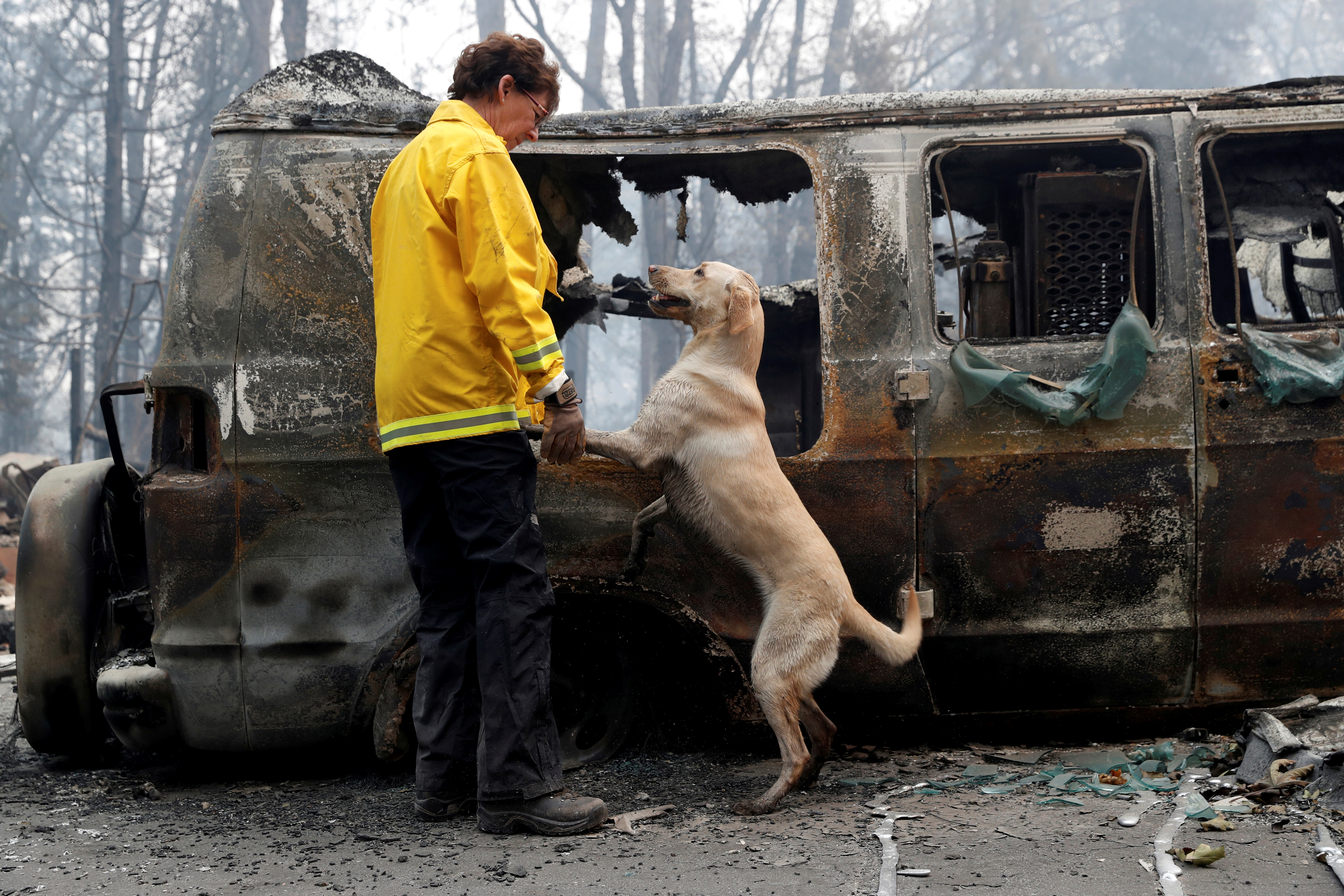 Karen Atkinson, of Marin, searches for human remains with her cadaver dog, Echo, in a van destroyed by the Camp Fire in Paradise, California, U.S., November 14, 2018. REUTERS/Terray Sylvester