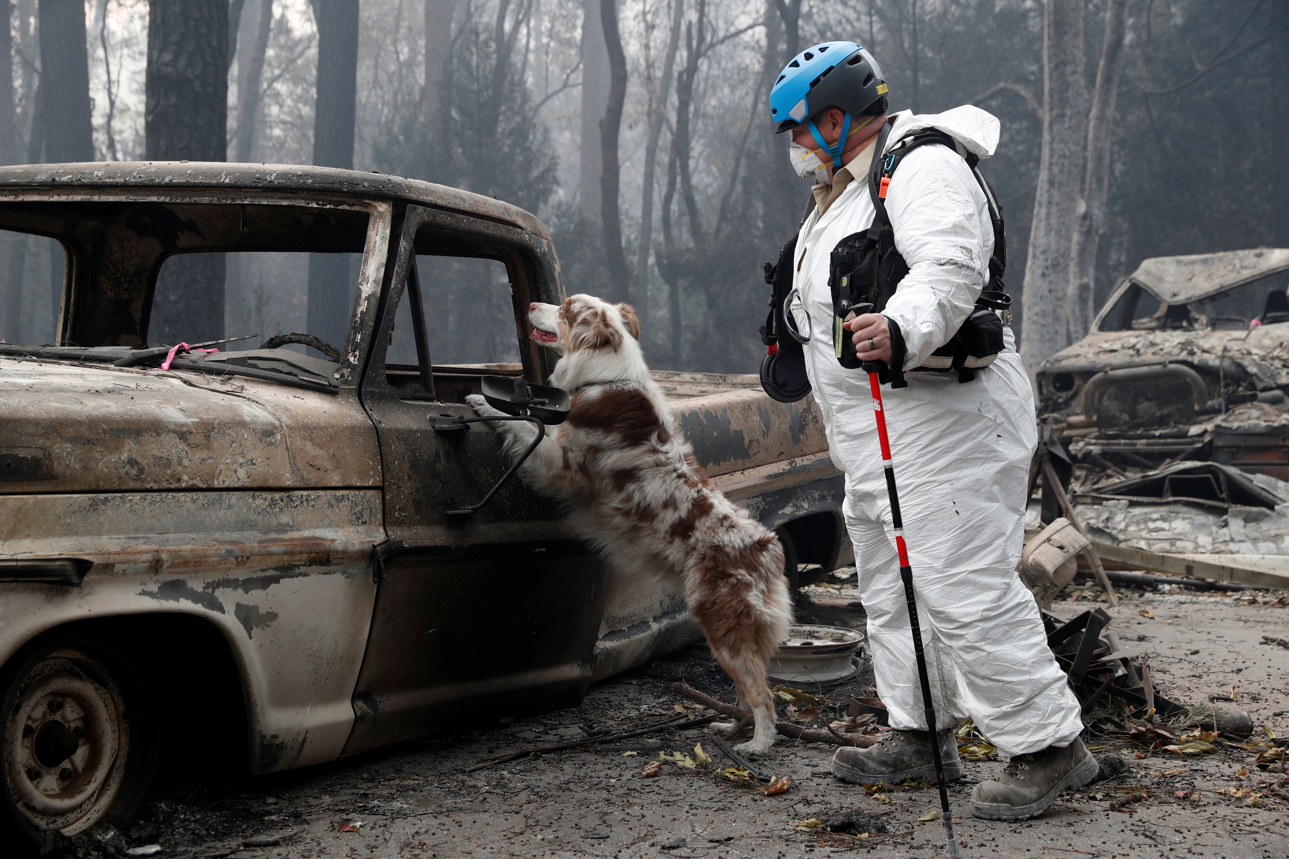 Trish Moutard, of Sacramento, searches for human remains with her cadaver dog, I.C., in a truck destroyed by the Camp Fire in Paradise, California, U.S., November 14, 2018. REUTERS/Terray Sylvester