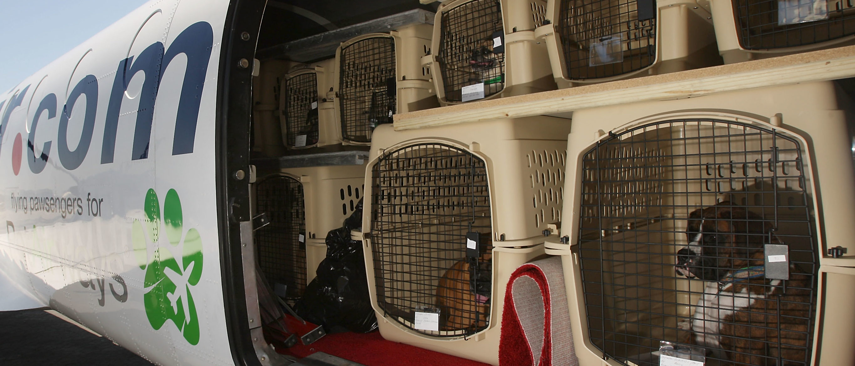 HAWTHORNE, CA - JULY 16: Pets are loaded for take-off on the southern California maiden voyage of Pet Airways on July 16, 2009 in the Los Angeles-area city of Hawthorne, California. The new pets-only airline will operate out of Denver, Chicago, Washington DC, and New York. Pet Airways, based in Delray Beach, Florida, is operating a 19-passenger Beech 1900 aircraft in partnership with Suburban Air Freight with the seats removed to carry up to 50 pets in animal crates per flight. Despite economic hard times for most U.S. businesses, the airline expects to add service to Boston later this year and expand into 25 cities within two years. (Photo by David McNew/Getty Images.