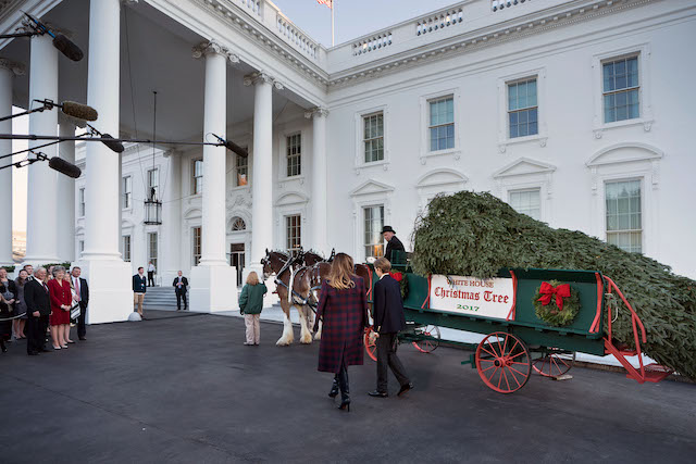 US first lady Melania Trump and Barron Trump arrive to receive a Christmas tree during an event at the White House November 20, 2017 in Washington, DC. (Photo credit: BRENDAN SMIALOWSKI/AFP/Getty Images)