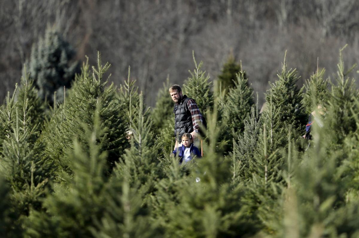 Christmas Tree Shortage.Nation Faces Christmas Tree Shortage As Holiday Season