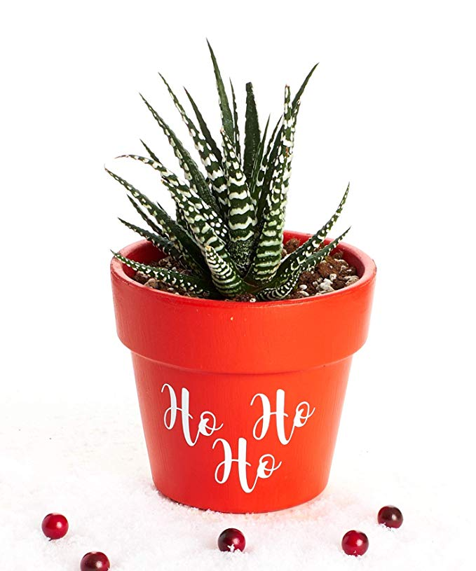 Normally $20, this #1 new release planter is 30 percent off today (Photo via Amazon)