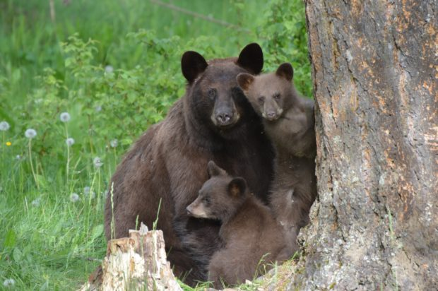 Bear family/Shutterstock