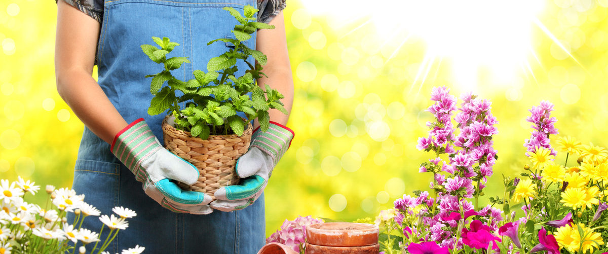 A gardener is holding a potted plant. (Shutterstock/Sofiaworld)