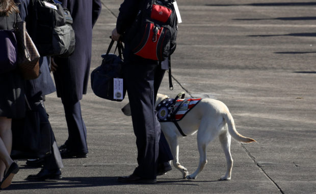 Former President George H.W. Bush's service dog Sully is seen at a departure ceremony during which the former president's casket was put on the Special Air Mission 41 plane at Ellington Field Joint Reserve Base in Houston, Texas, U.S., December 3, 2018. (REUTERS/Loren Elliott)