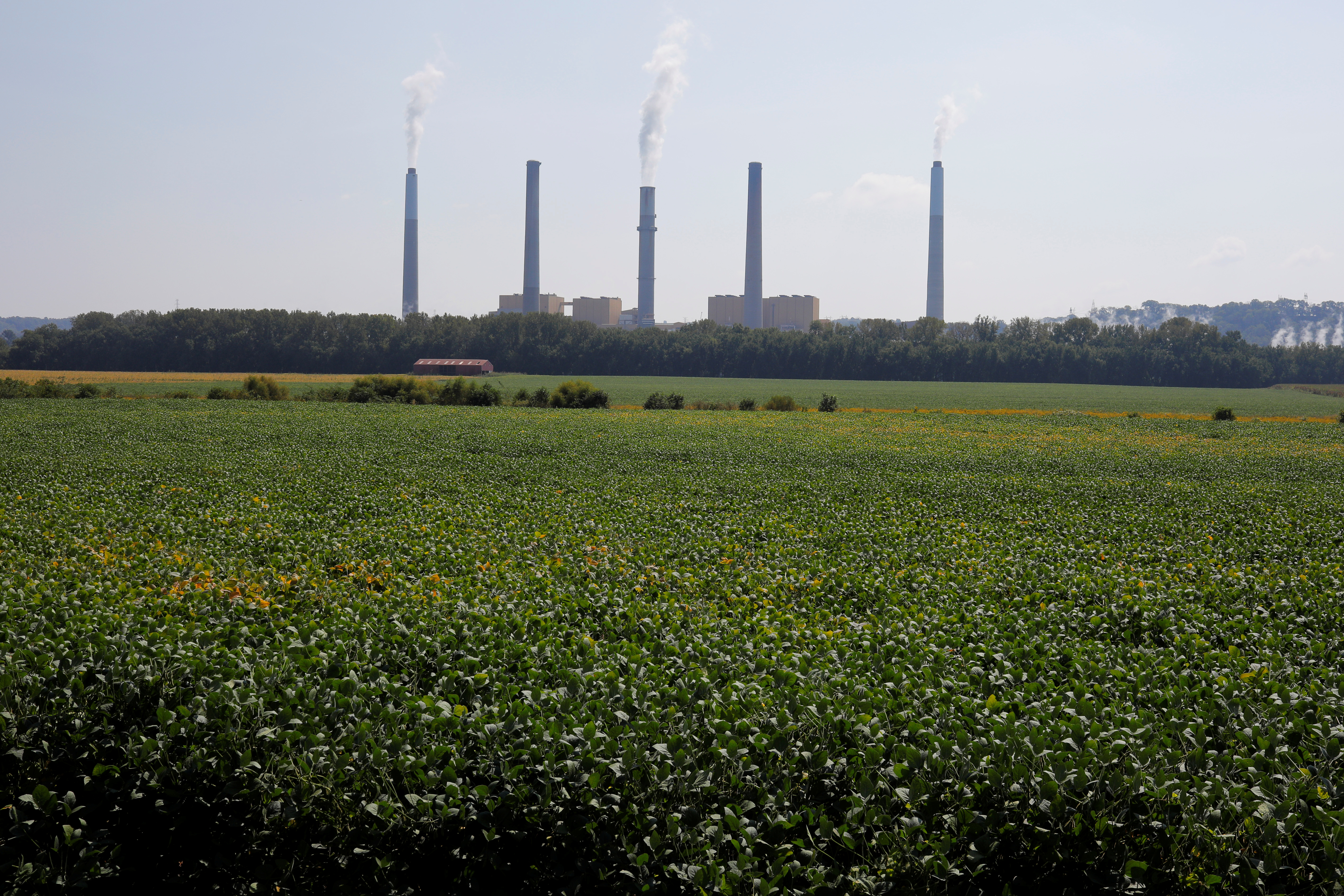 Soybeans grow in front of the Kentucky Utilities Ghent Generating Station, a coal-fired power-plant, along the Ohio River in Vevay