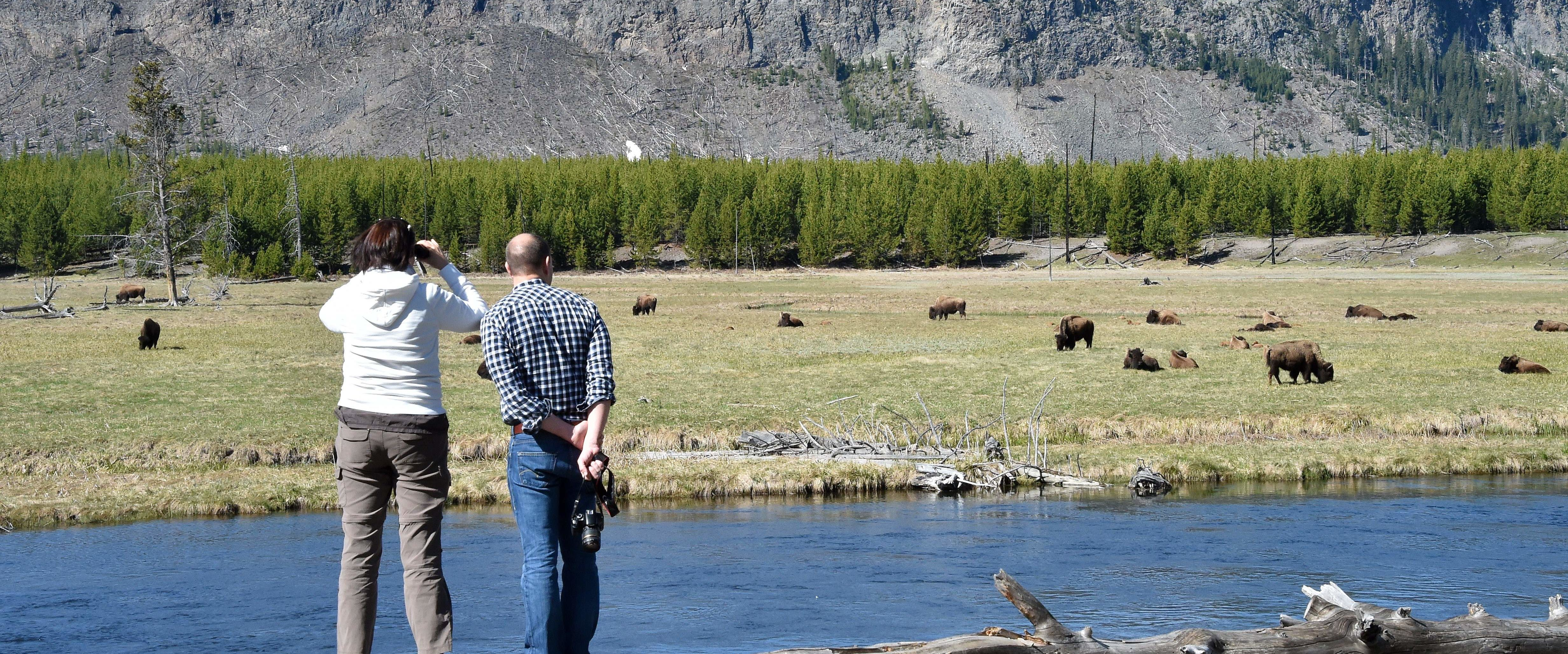 Tourists observe a herd of bisons at Yellowstone National Park on May 12, 2016. / AFP / MLADEN ANTONOV (Photo credit should read MLADEN ANTONOV/AFP/Getty Images)
