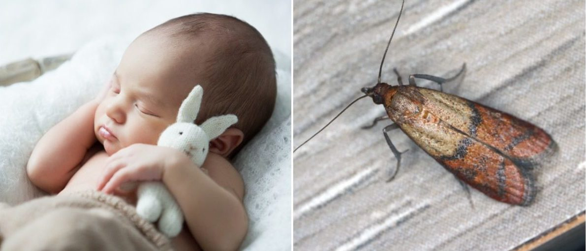 Baby and mealmoth (LEFT: Alena Sli/Shutterstock RIGHT: Tomasz Klejdysz/ Shutterstock)