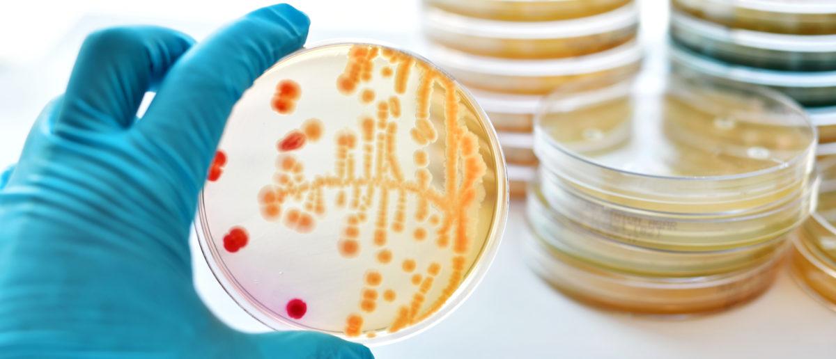 A scientist examines a petri dish. Shutterstock image by Jarun Ontakrai