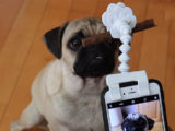 Originally $25, get this adjustable pet selfie attachment for 45 percent off