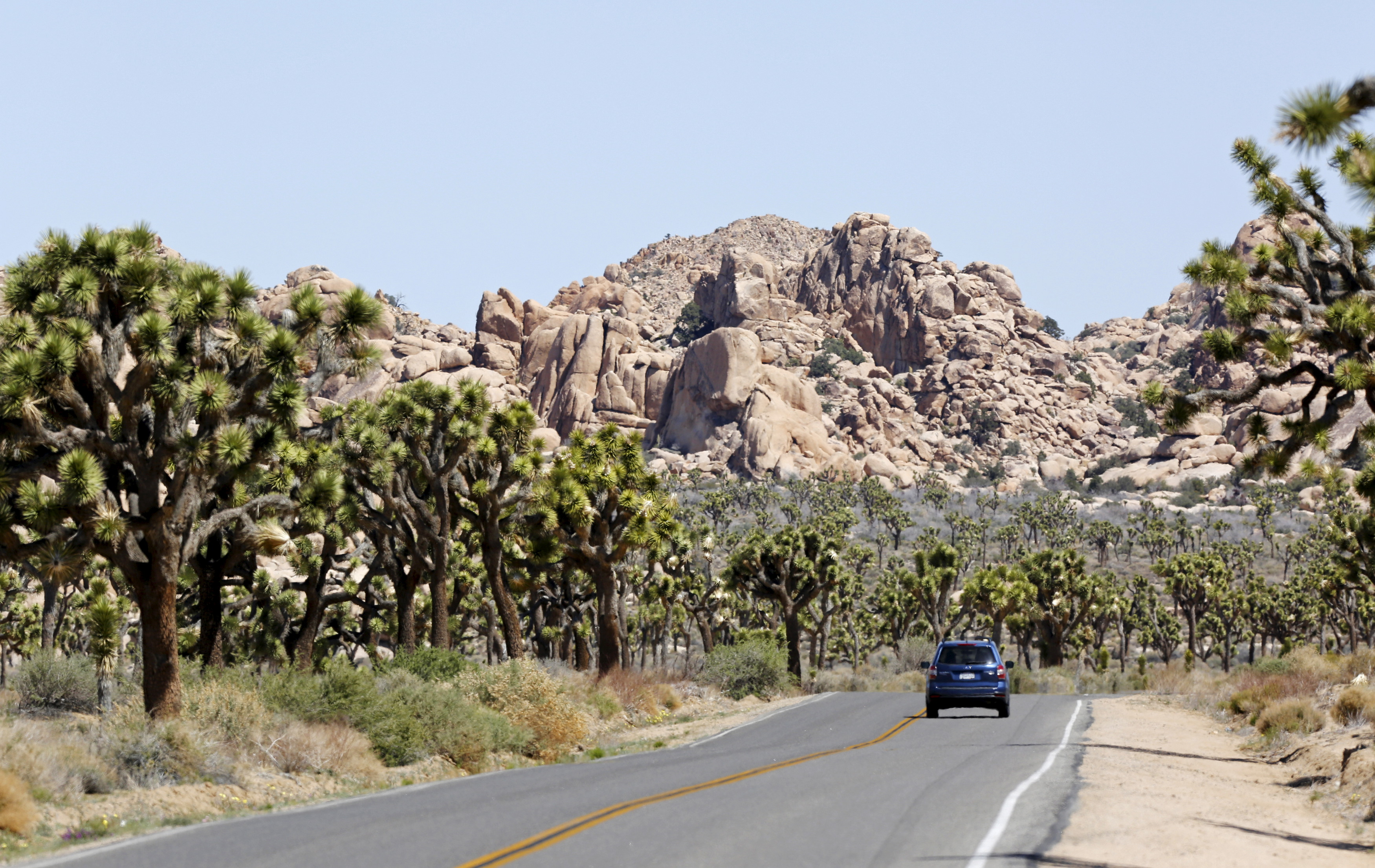 A car is driven in Joshua Tree National Park, California, in this photo taken April 16, 2015. REUTERS/ Sam Mircovich