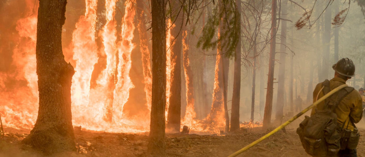 Firefighter fight fire near torching trees as wildfire burns near Yosemite National Park in this US Forest Service photo released on social media from California, U.S., Aug. 6, 2018. Courtesy USFS/Yosemite National Park/Handout via REUTERS