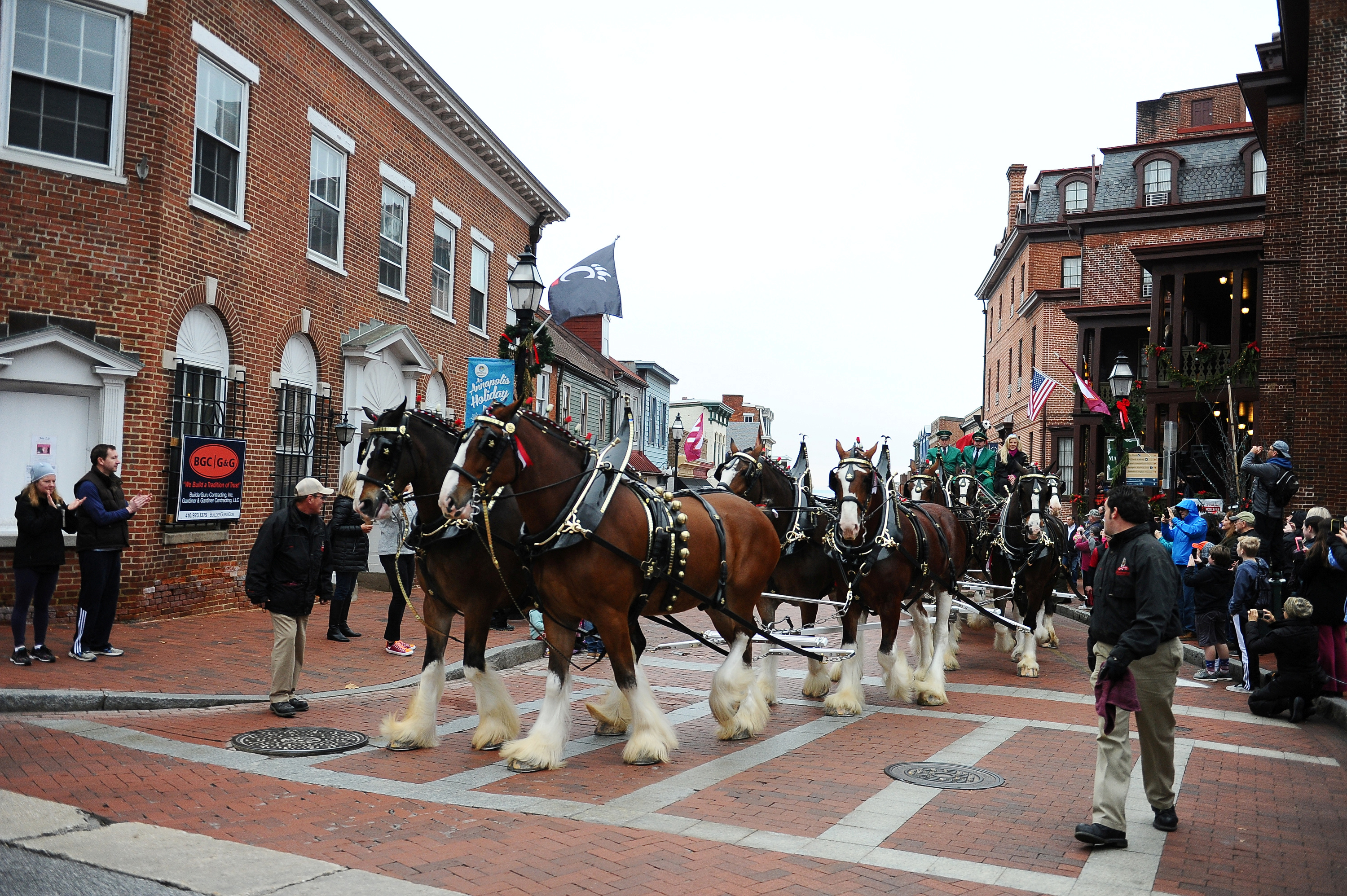 The Budweiser Clydesdales lead the Military Bowl parade marched Main Street in Annapolis