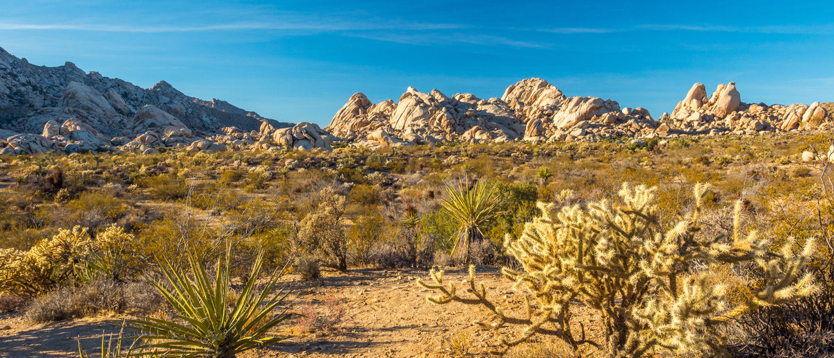 The Mojave Desert Might Solve California's Water Problem