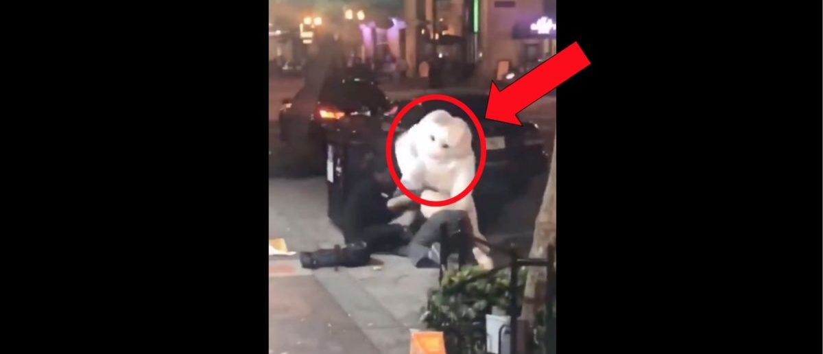 Person In Easter Bunny Costume Throws Punches During Wild Fight Caught On Video