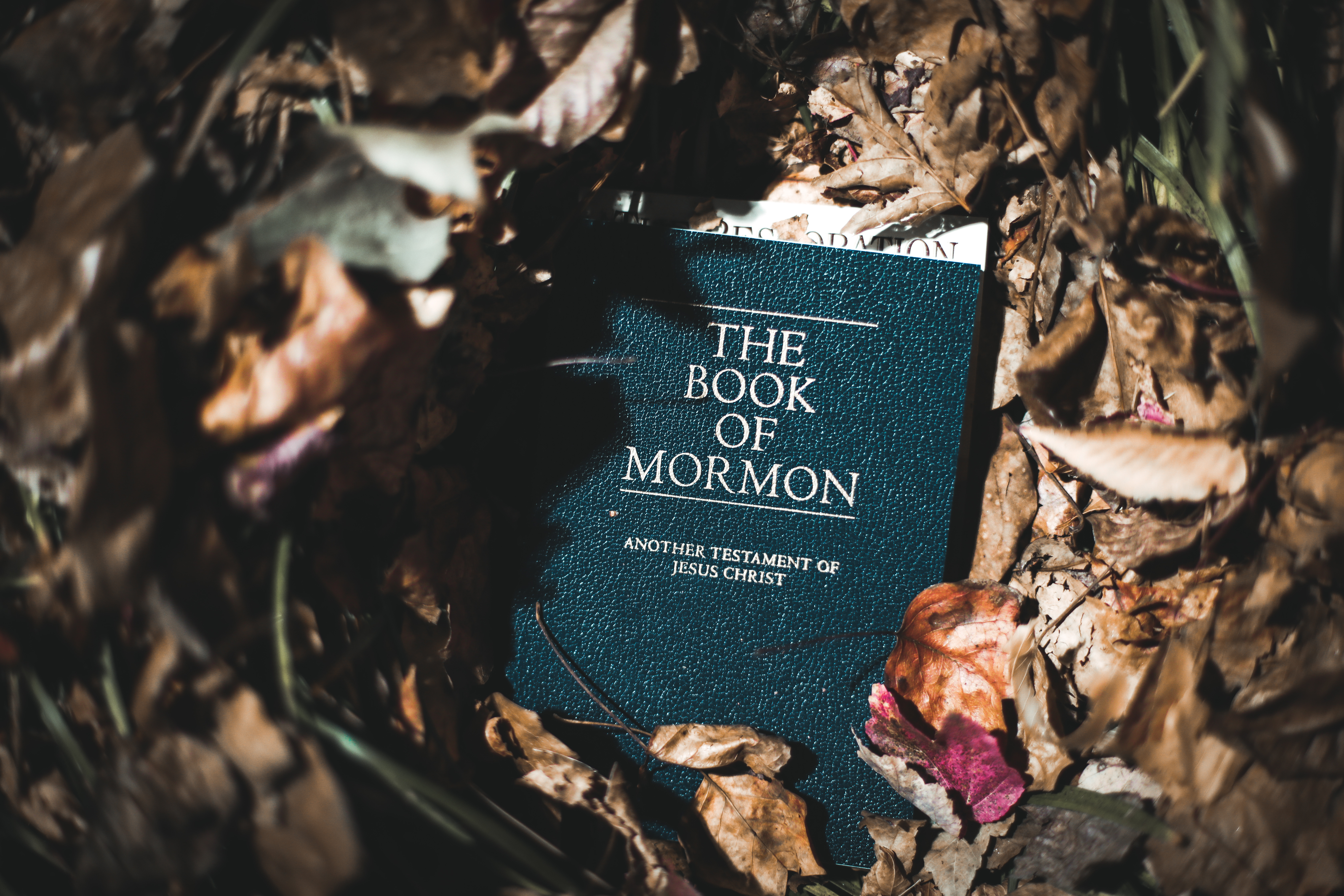 Pictured is a Book of Mormon. SHUTTERSTOCK/ Nicole S Glass