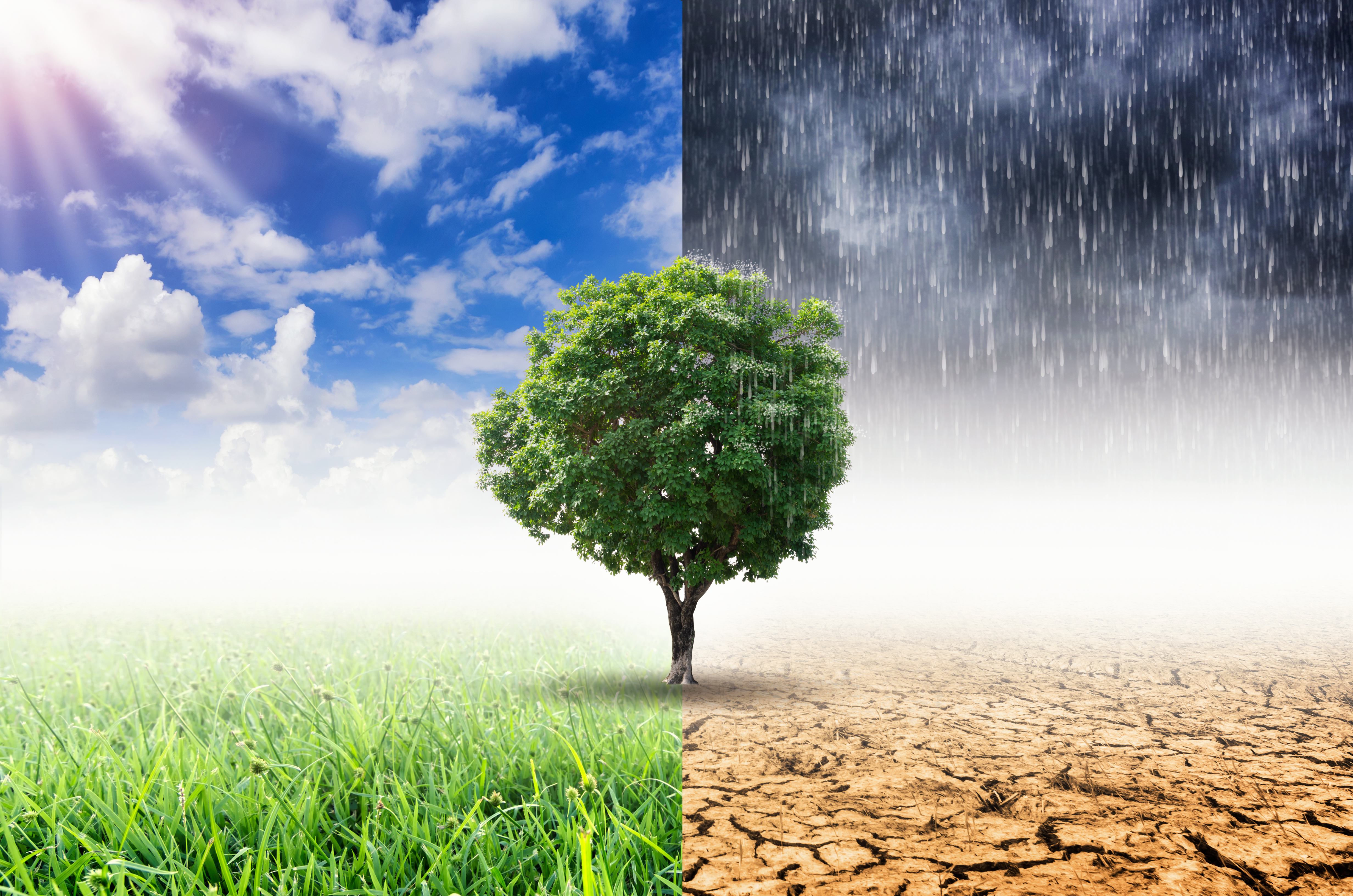 Pictured is the concept of climate change. SHUTTERSTOCK/ 24Novembers