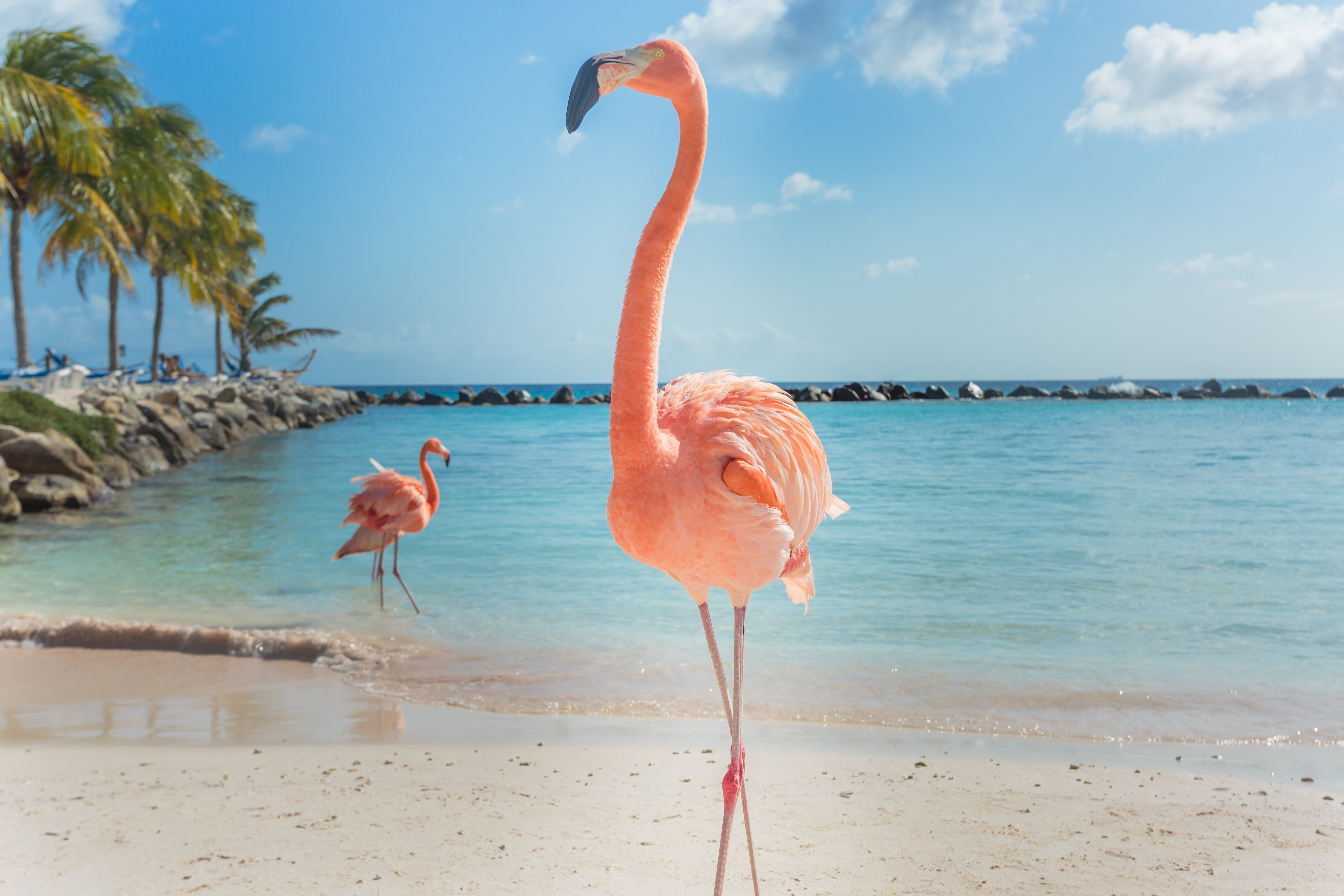 Pictured is a flamingo. SHUTTERSTOCK/ MasterPhoto