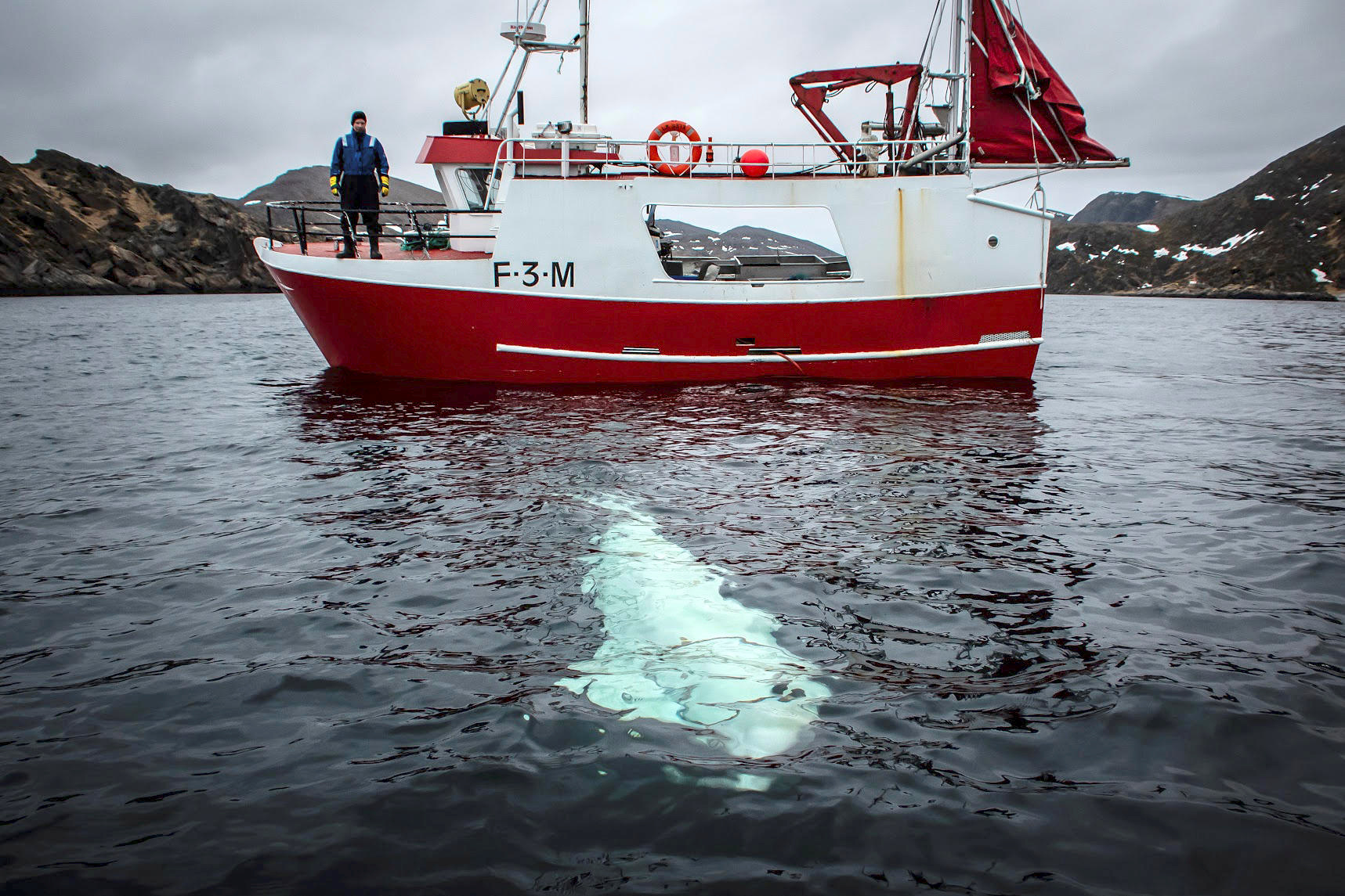 A white beluga whale wearing a harness is seen next to a fishing boat off the coast of northern Norway, April 29, 2019. Jorgen Ree Wiig/Sea Surveillance Service/Handout/NTB Scanpix via REUTERS