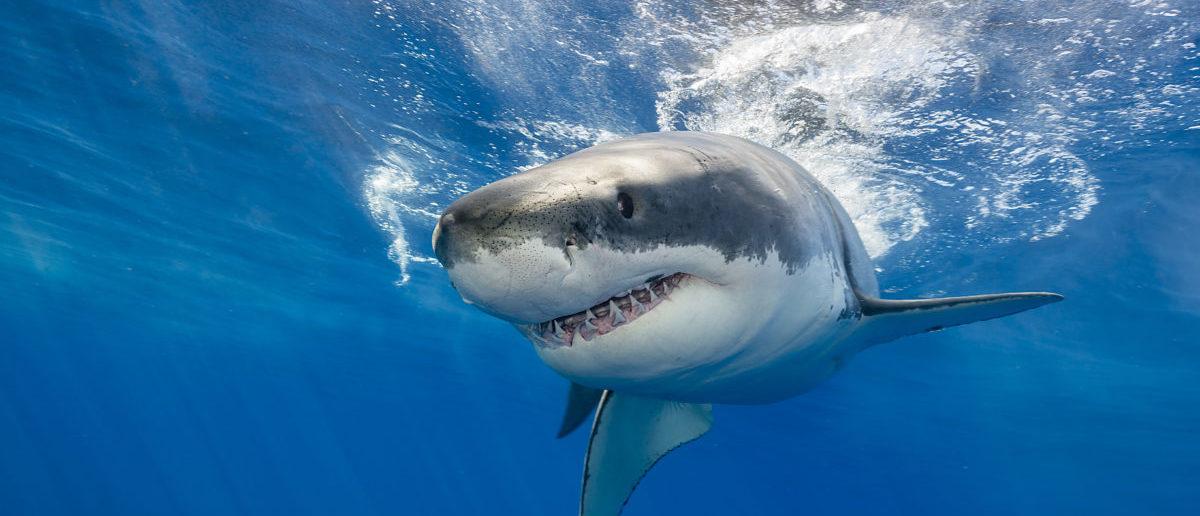 65 Year Old Man Dies In Hawaii Following Apparent Shark