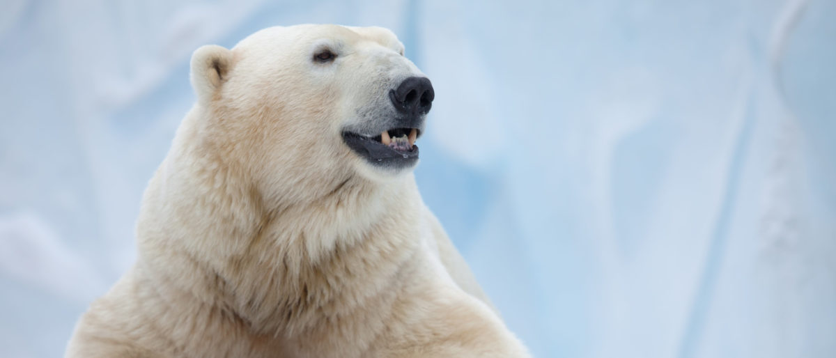 Man Charged With The Illegal Killing Of A Polar Bear Faces A $100,000 Fine, Up To 1 Year In Prison