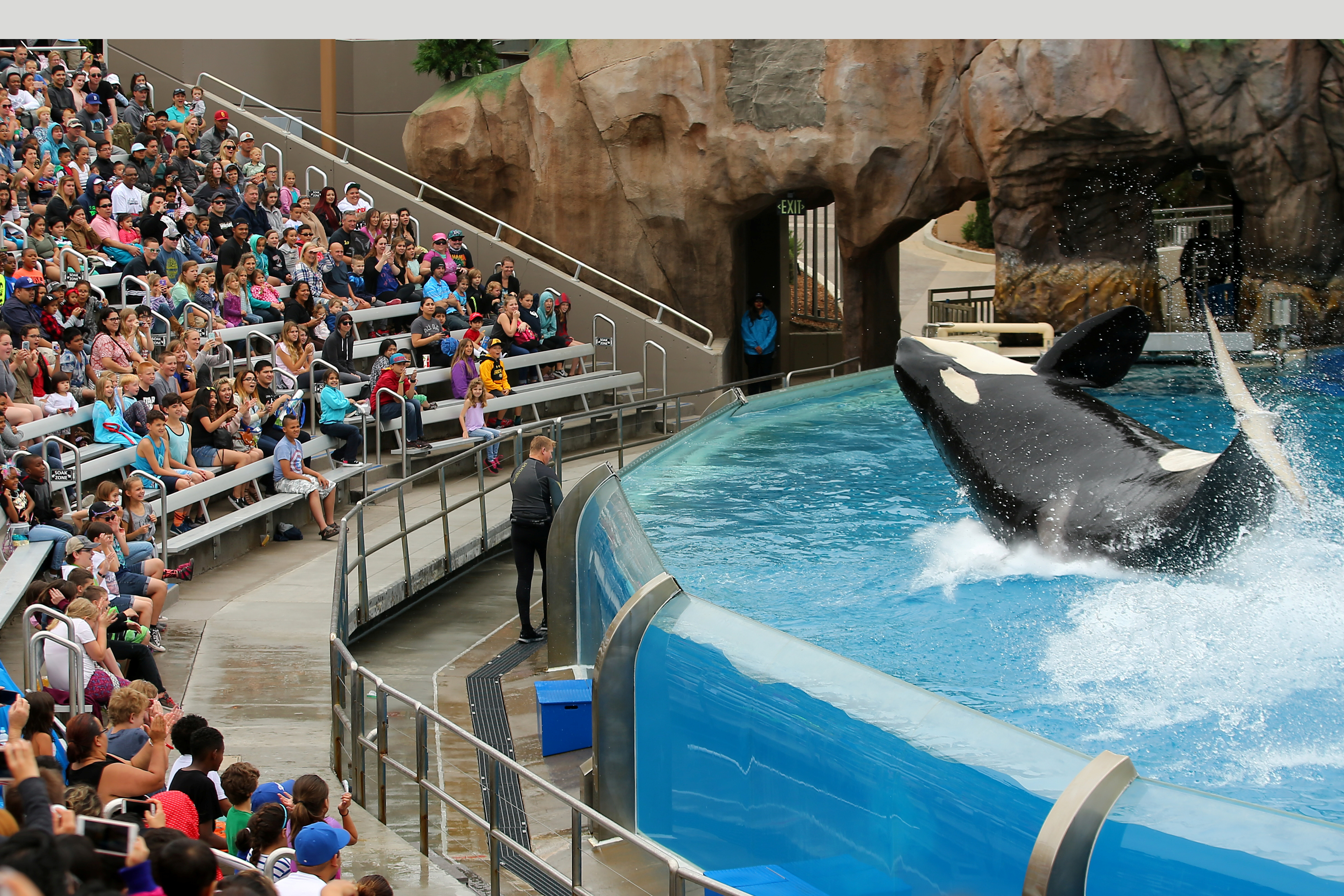 SeaWorld unveils its new Orca Encounter show in San Diego, California, U.S., May 31, 2017. (REUTERS/Mike Blake)