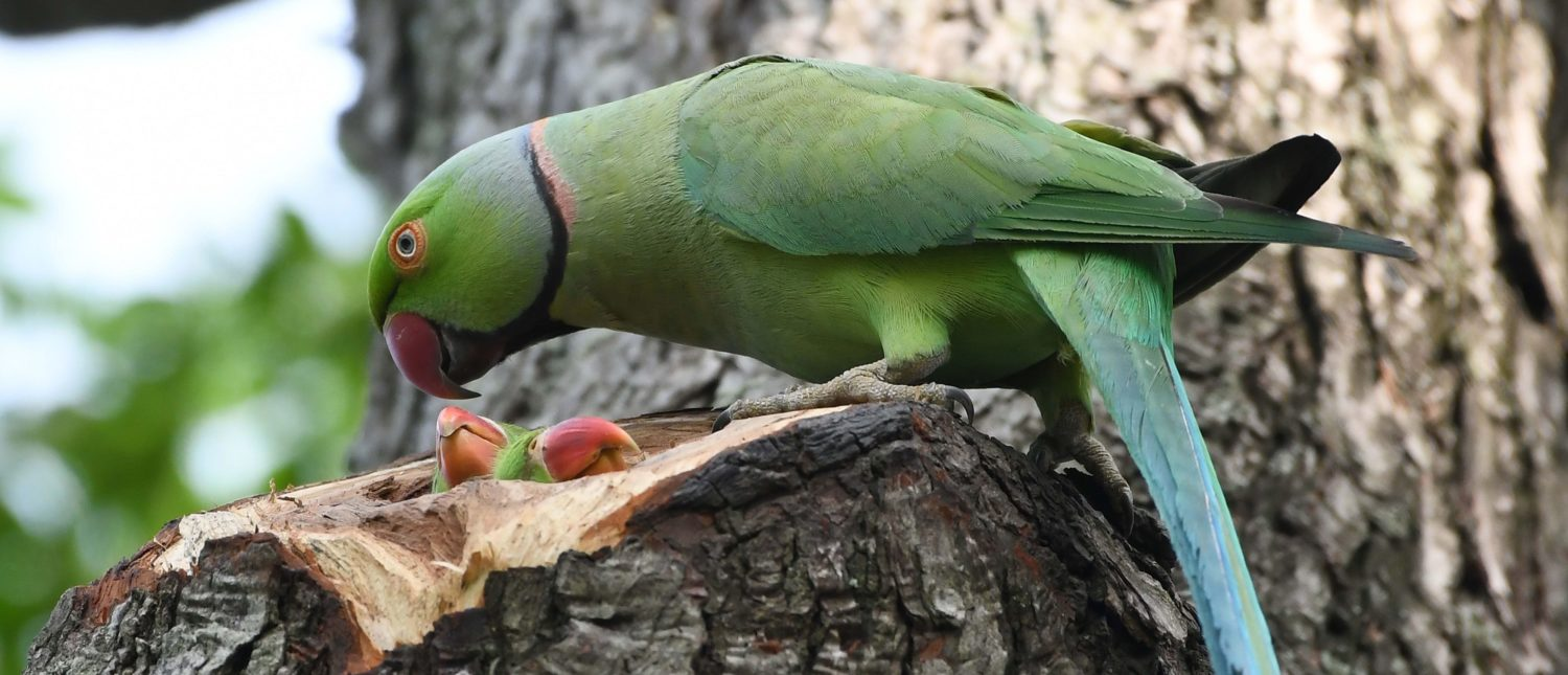 Giant Parrots Used To Roam Ancient New Zealand, According To Newly-Discovered Fossils