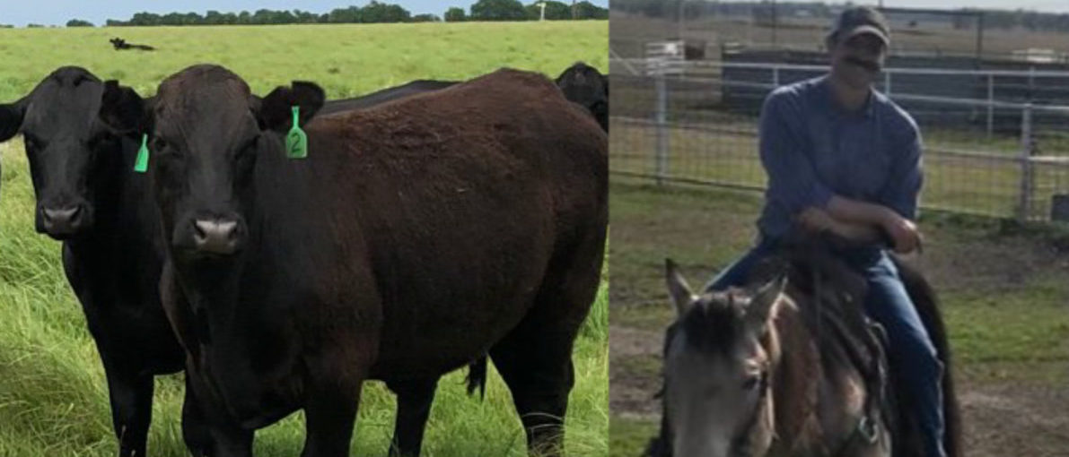 'It's An Assault On Our Way Of Life': Cattle Rancher Slams 2020 Dems Over 'War On Beef'