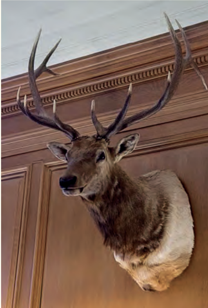 Leroy the elk is displayed in Justice Gorsuch's chambers. (Credit: Collection of the Supreme Court of the United States)