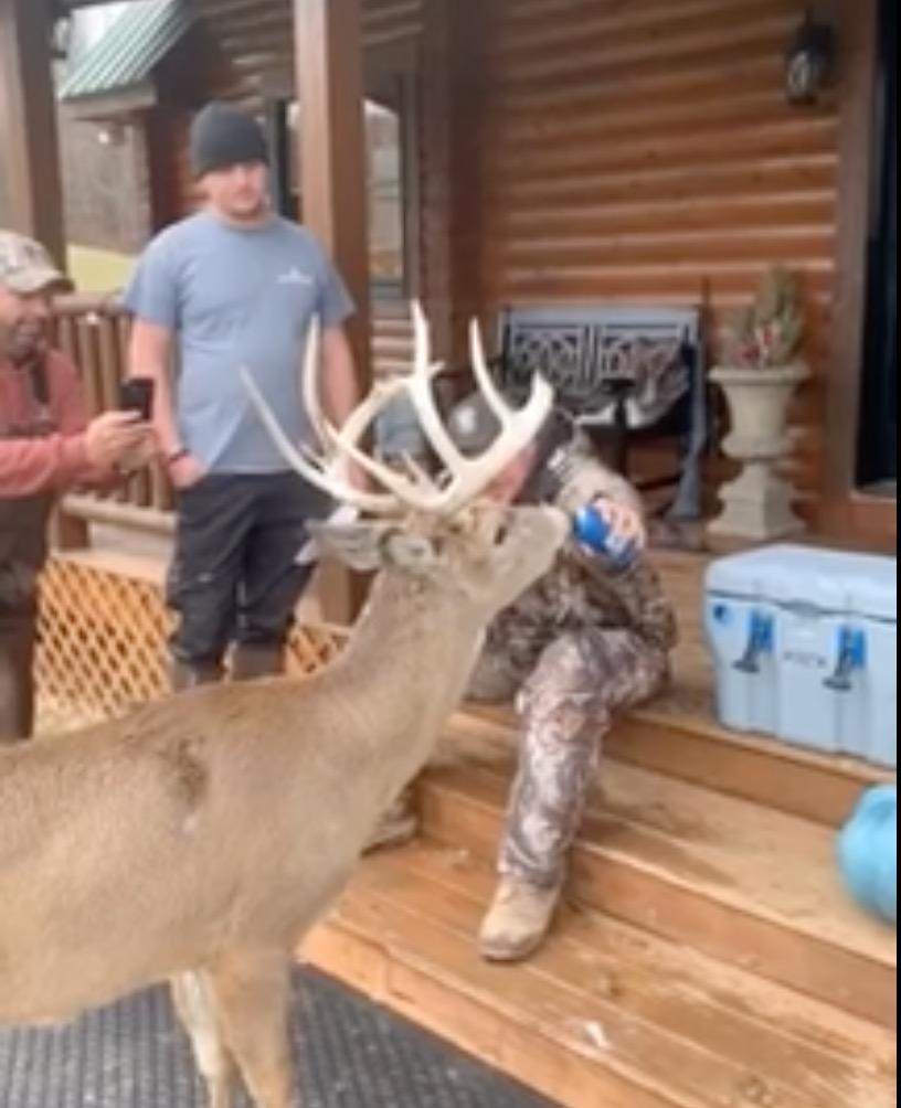 Deer drinking beer (Credit: Screenshot/Facebook Video https://www.facebook.com/thomas.meadows.777/videos/2904637592882747)