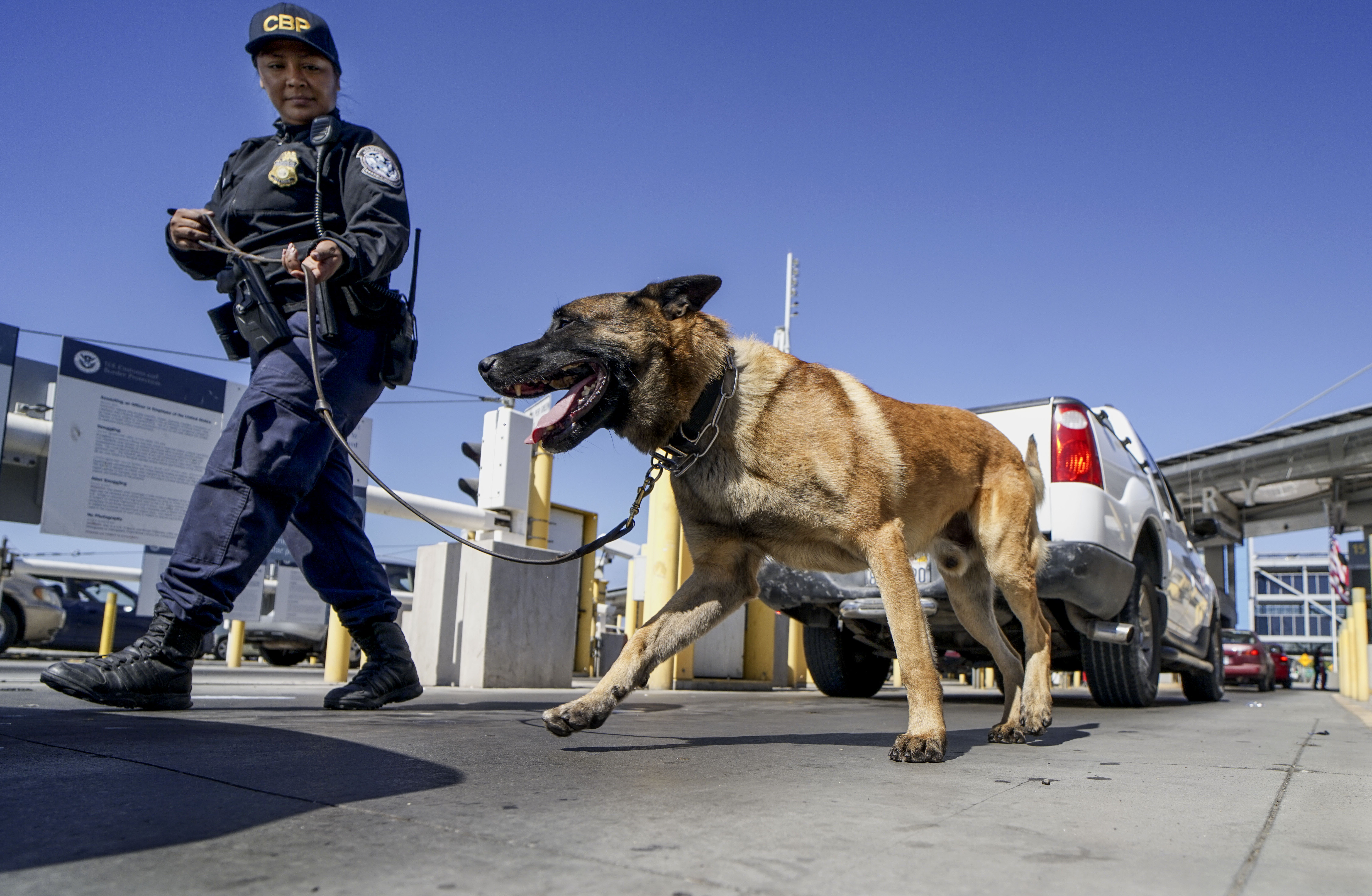 An Immigration and Customs Enforcement (ICE) K-9 agent checks automobiles for contraband in the line to enter the United States at the San Ysidro Port of Entry on October 2, 2019 in San Ysidro, California. - Fentanyl, a powerful painkiller approved by the US Food and Drug Administration for a range of conditions, has been central to the American opioid crisis which began in the late 1990s. China was the first country to manufacture illegal fentanyl for the US market, but the problem surged when trafficking through Mexico began around 2005, according to Donovan. (Photo by SANDY HUFFAKER / AFP) (Photo by SANDY HUFFAKER/AFP via Getty Images)