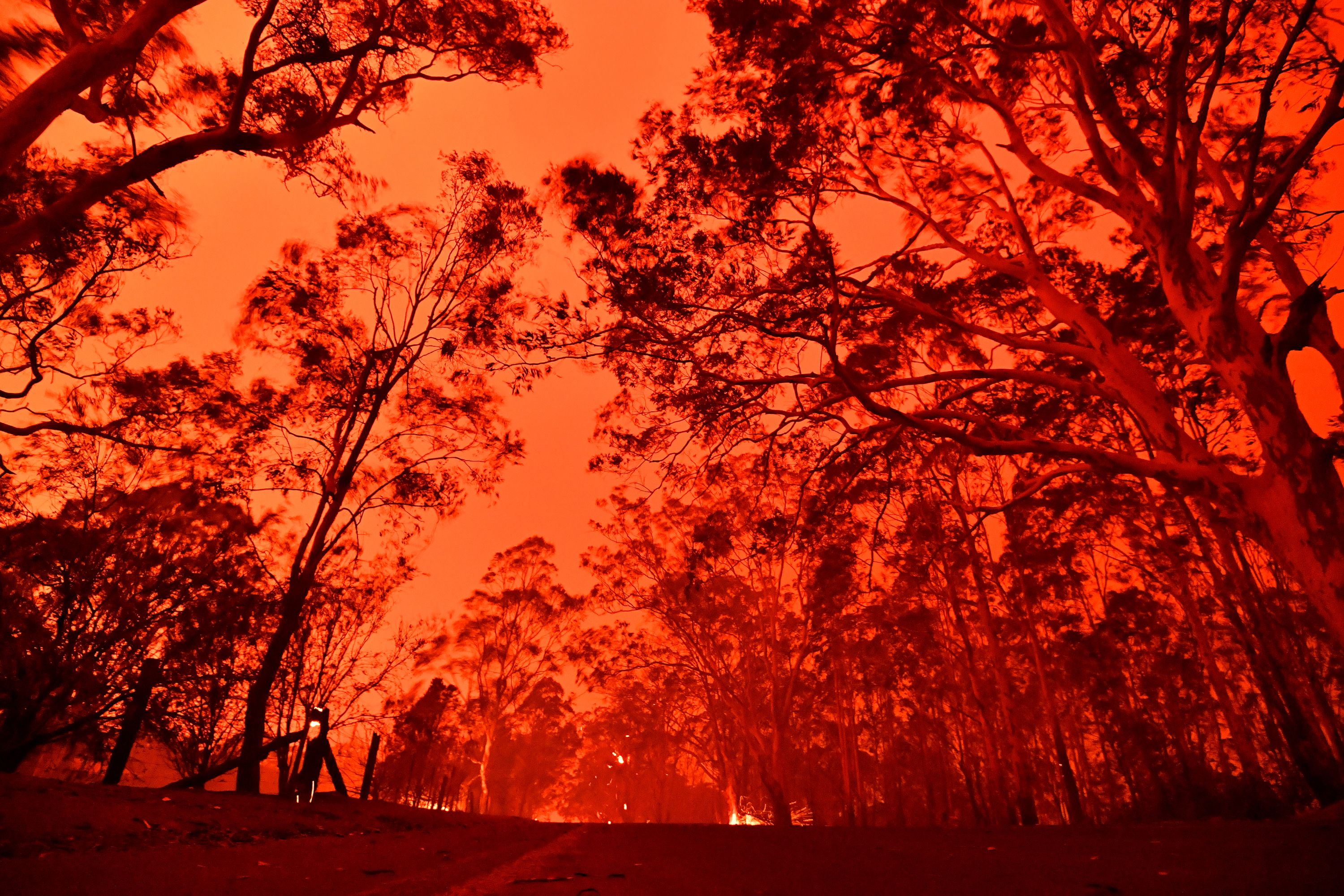 The afternoon sky glows red from bushfires in the area around the town of Nowra in the Australian state of New South Wales on December 31, 2019. - Thousands of holidaymakers and locals were forced to flee to beaches in fire-ravaged southeast Australia on December 31, as blazes ripped through popular tourist areas leaving no escape by land. (Photo by SAEED KHAN/AFP via Getty Images)