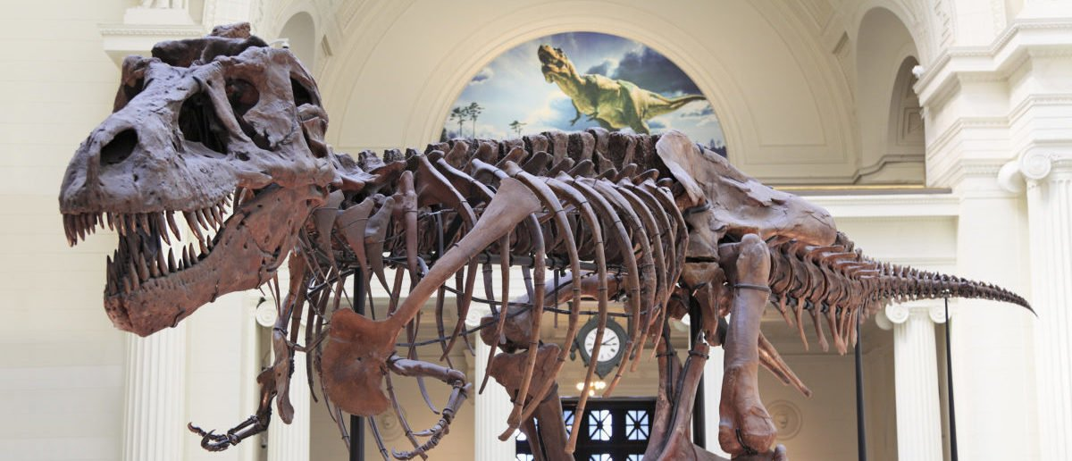 FACT CHECK: Did North Carolina Scientists Create A T. Rex Embryo Using Chicken DNA?