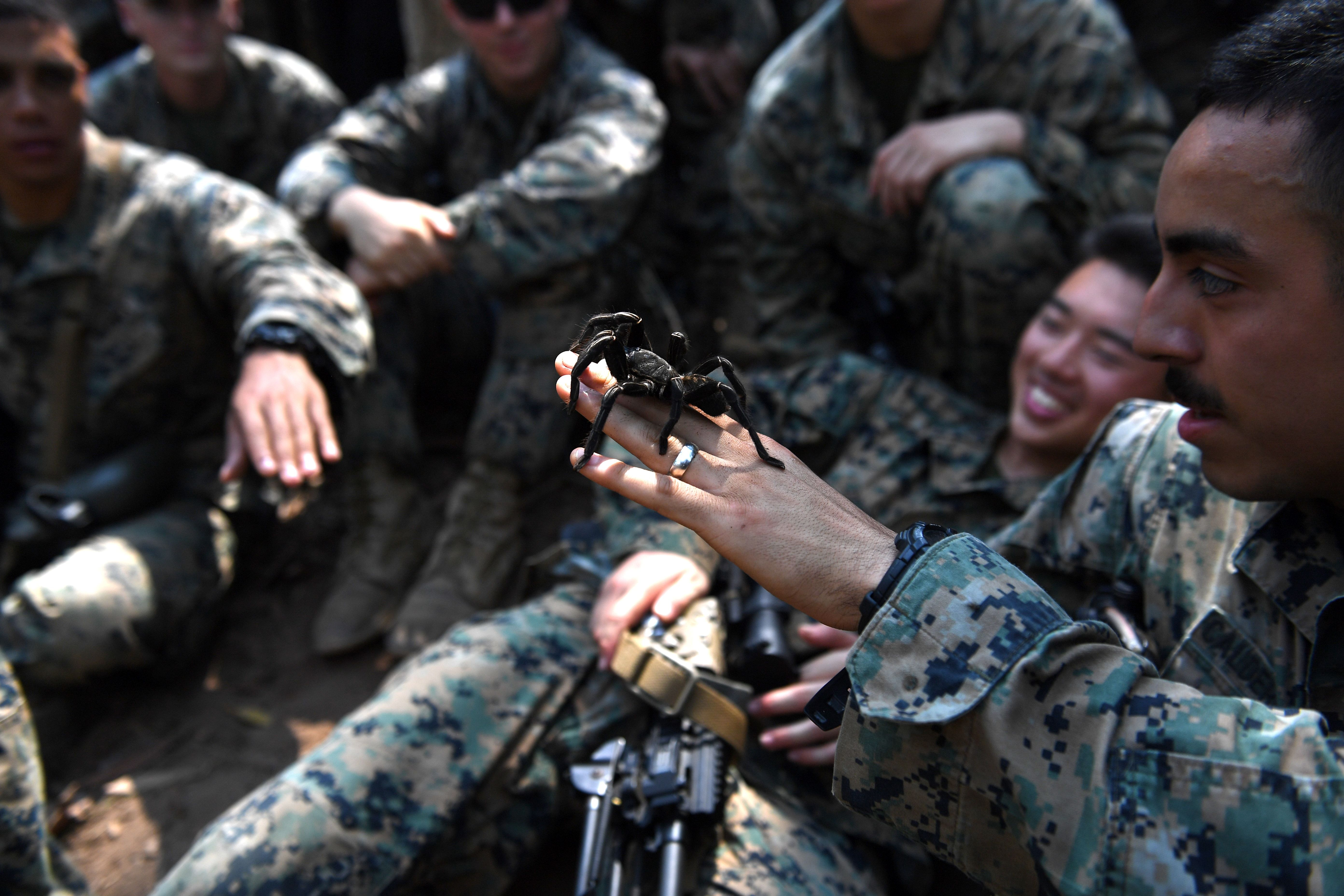 A US Marine holds a tarantula during a jungle survival training with Thai soldiers in the joint 'Cobra Gold' military exercise. (LILLIAN SUWANRUMPHA/AFP via Getty Images)