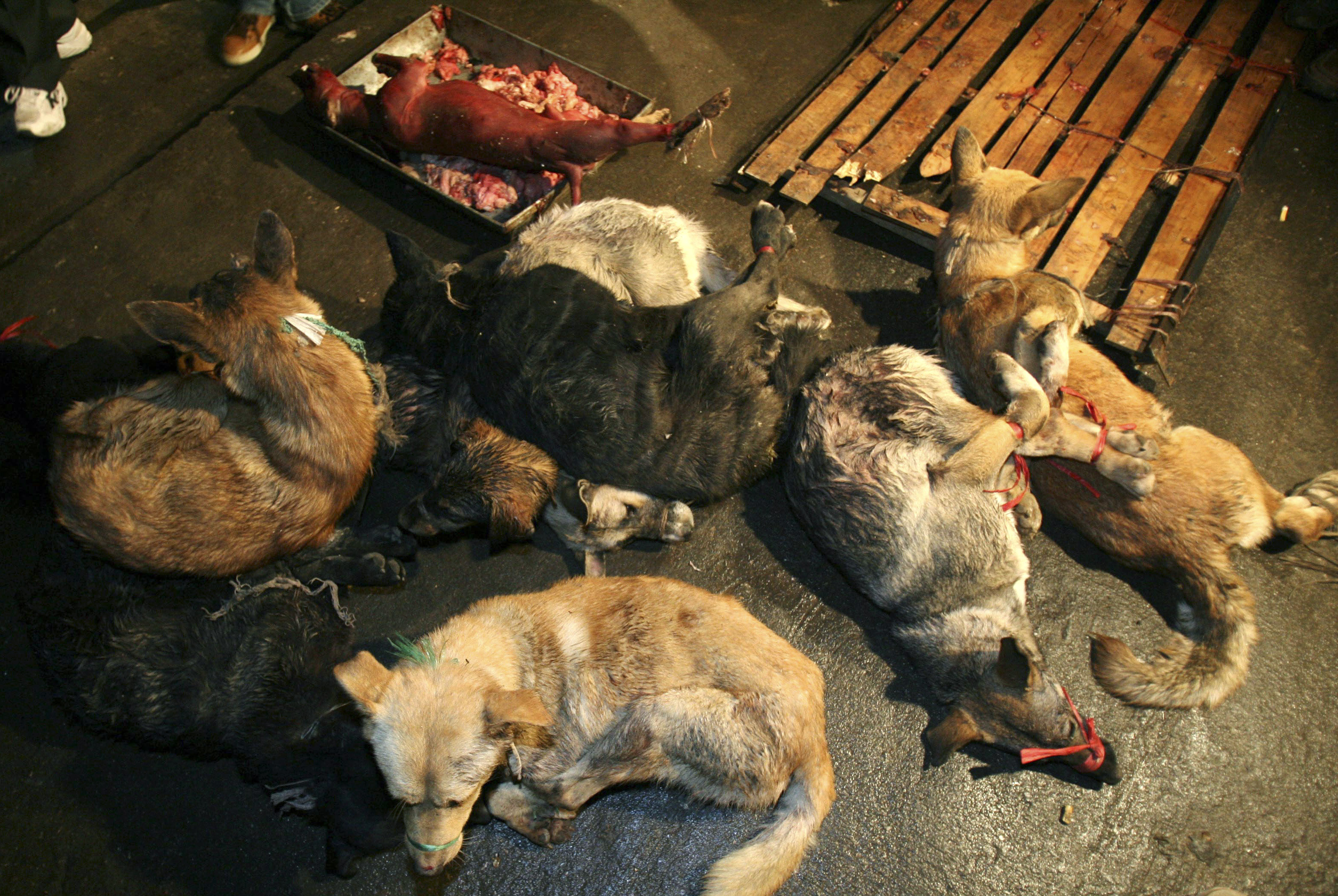 A skinned dog lies in the background as dogs that have not been quarantined, are gathered by local officials at a market selling dog meat in Nanjing, east China's Jiangsu province, December 13, 2006. (REUTERS/Jeff Xu (CHINA) - GM1DUDOQNRAA)