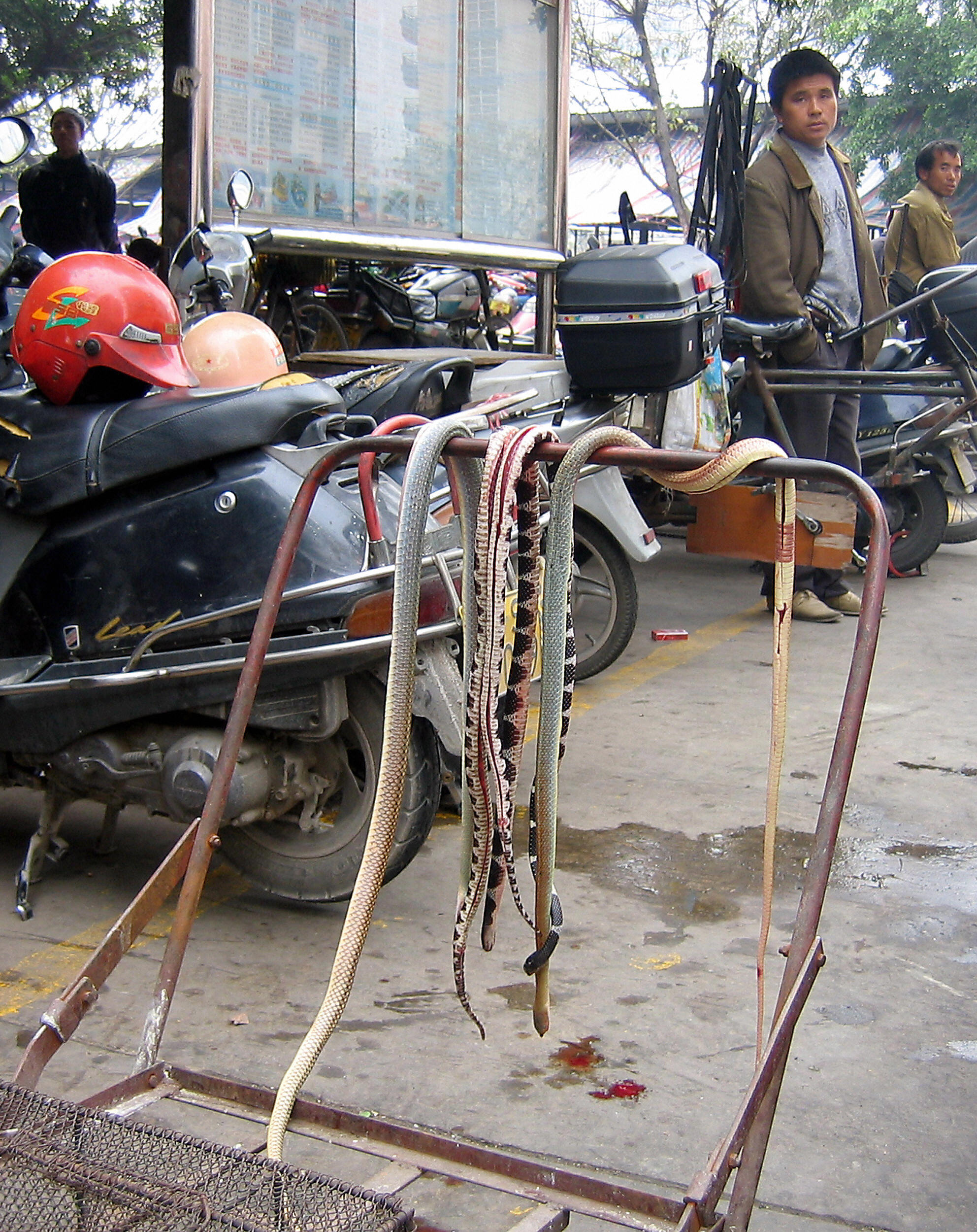 Various type of snakes hang from a push-cart at the Xi Cun meat market in Dongguan, southern China's Guangdong province 23 January 2005. (ROBERT J.SAIGET/AFP via Getty Images)