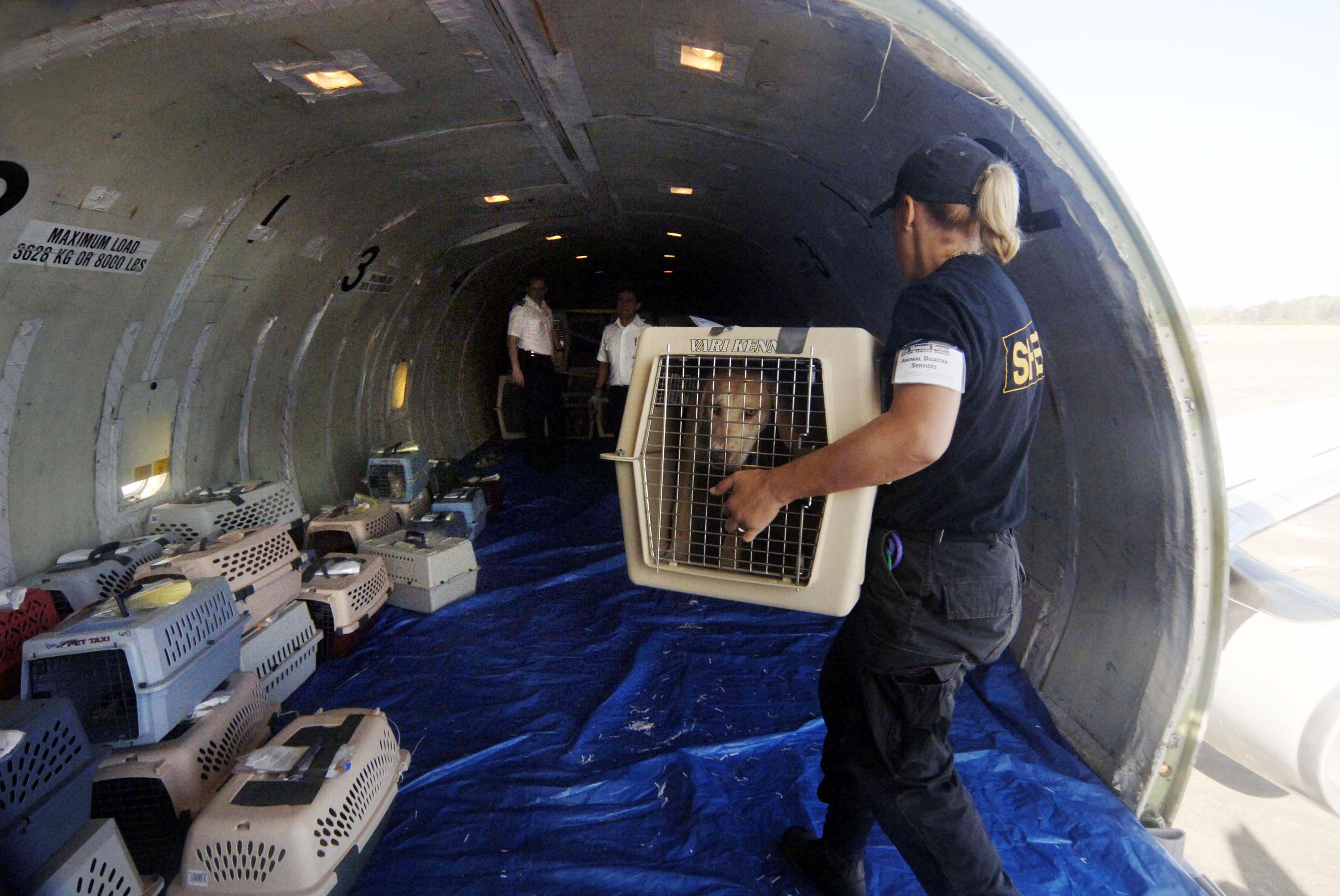 HATTIESBURG, MS - SEPT. 22: A worker with the Humane Society of Missouri loads a dog in a cage on a plane for flight transport to St. Louis, Missouri, Sept. 22, 2005 in Hattiesburg, Mississippi. The dog is one of over 100 being transported to be taken in by foster owners until they can be reunited with their owners or placed for permanent adoption. Together the United States Humane Society and the Humane Society of Missouri have rescued thousands of pets since Hurricane Katrina devastated the Mississippi Gulf Coast and New Orleans. (Photo by Marianne Todd/Getty Images)