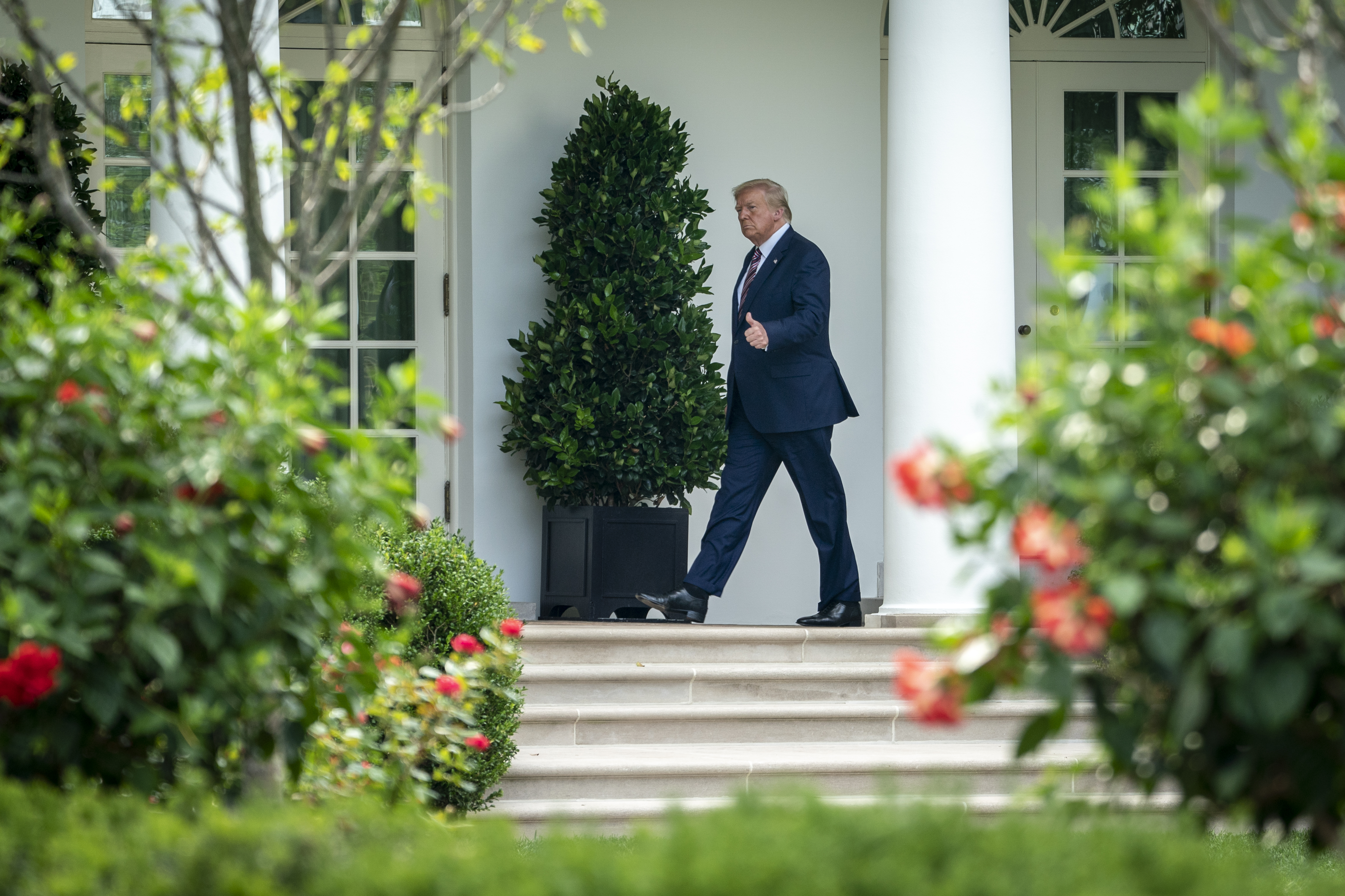 WASHINGTON, DC - JULY 16: U.S. President Donald Trump walks to the Oval Office after an event about regulatory reform on the South Lawn of the White House on July 16, 2020 in Washington, DC. On Wednesday, President Trump announced a rollback of the National Environmental Policy Act. The administrations changes to the law aim to decrease the number of infrastructure projects that will be subject to federal NEPA review, hoping to shorten long permit processes and speed up approval. (Photo by Drew Angerer/Getty Images)