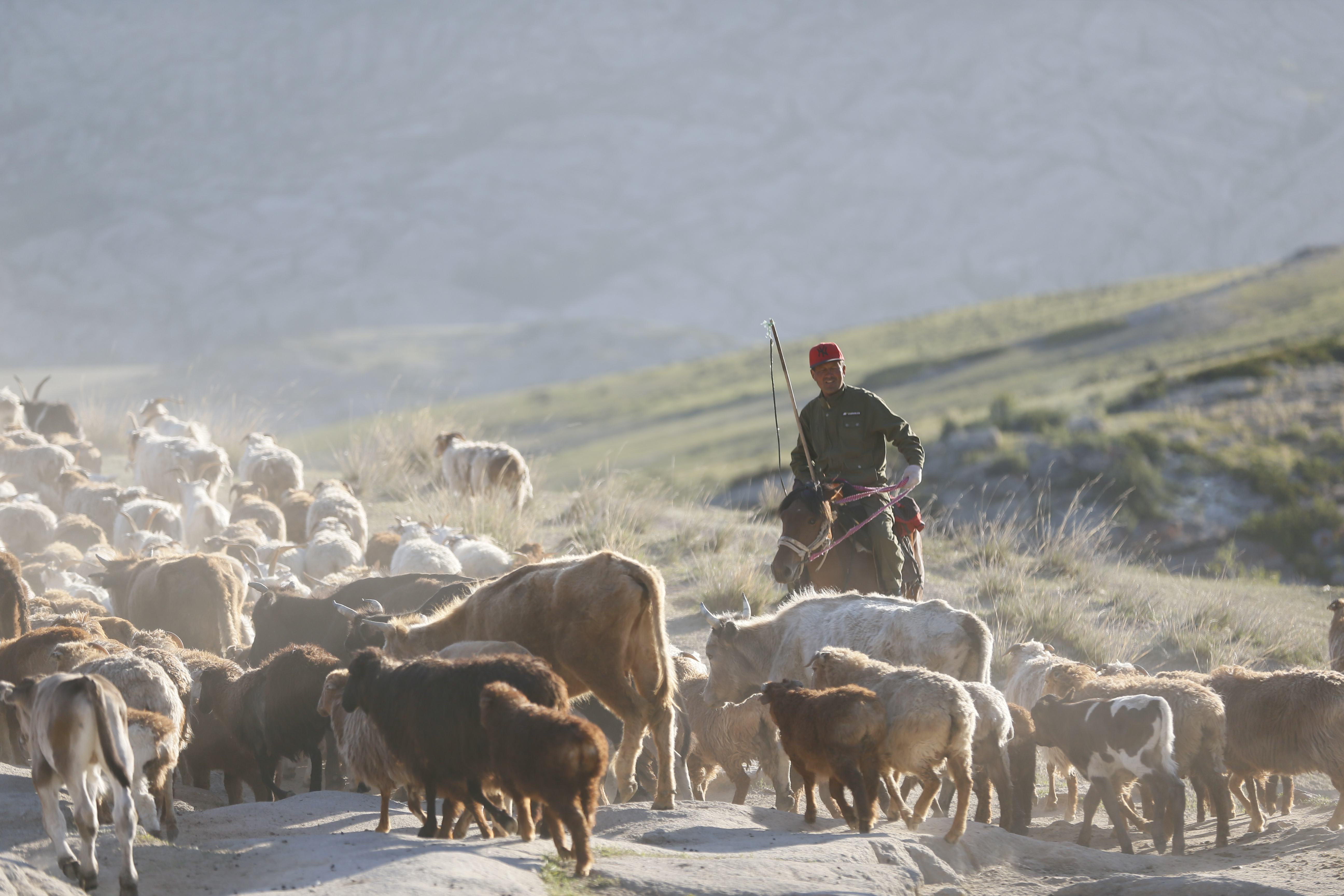 A Chinese herdsman with his cattle in the Gobi Desert in Altay, Xinjiang Uyghur Autonomous Region in 2014. (Photo: Xiaolu Chu/Getty Images)