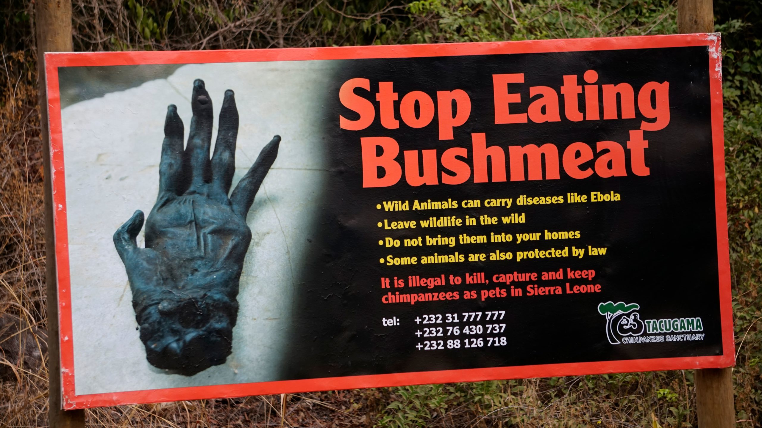 A sign of The Tacugama Chimpanzee Sanctuary on February 27, 2019, is seen during a visit by Primatologist Jane Goodall. - Hunting for bushmeat is one of the bigger threats against the critically-endangered western chimpanzee. Tacugama, which Goodall took a primary role in founding, is Sierra Leones first and only sanctuary for chimpanzees. (Photo by STR / AFP) (Photo credit should read STR/AFP via Getty Images)