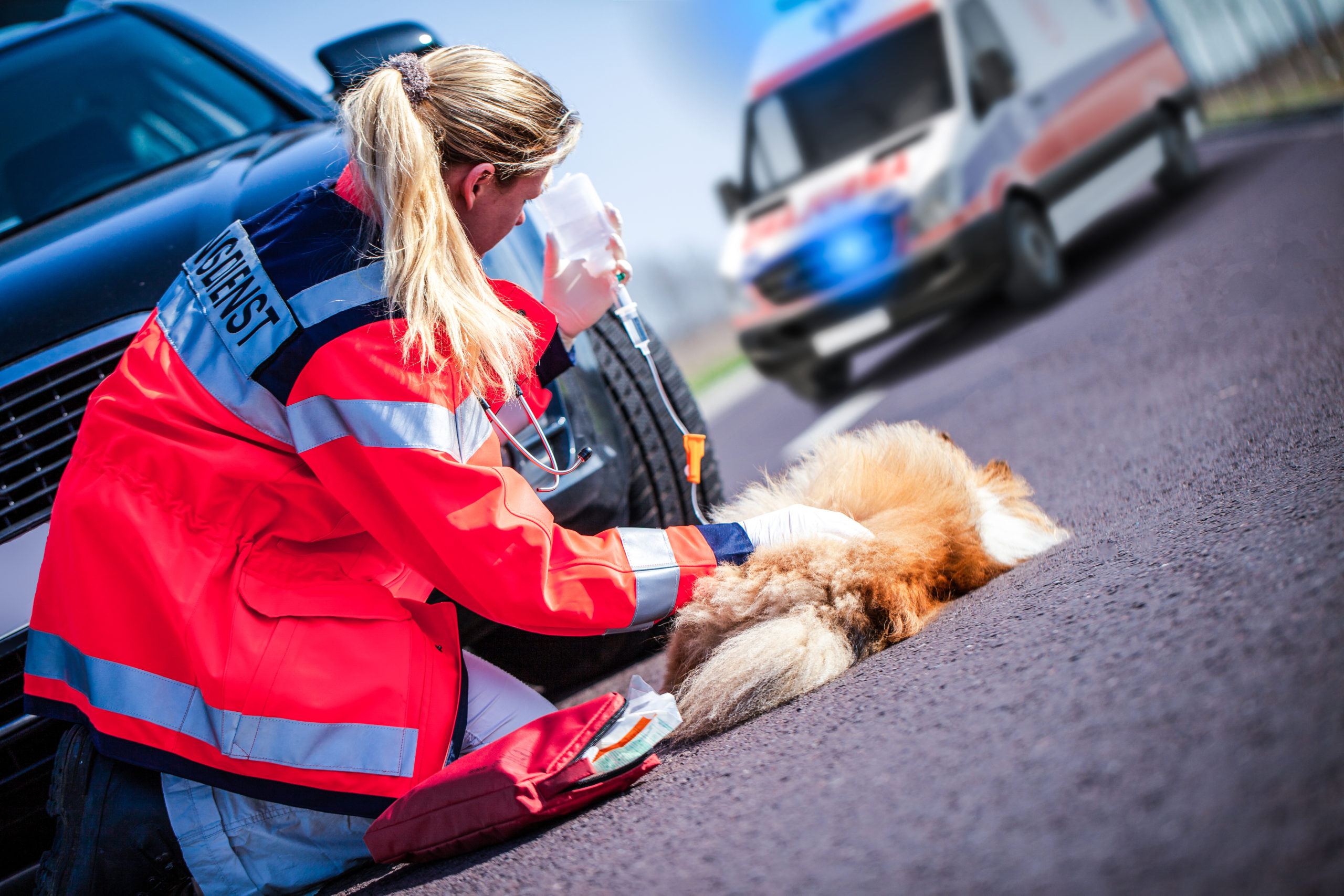 Animal medic treats an injured dog (Shutterstock/Nehris)