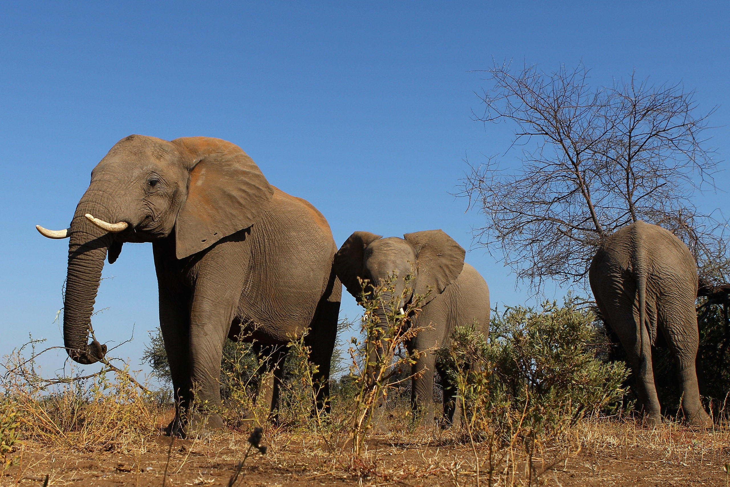A herd of elephants at the Mashatu game reserve on July 26, 2010 in Mapungubwe, Botswana. (Photo by Cameron Spencer/Getty Images)