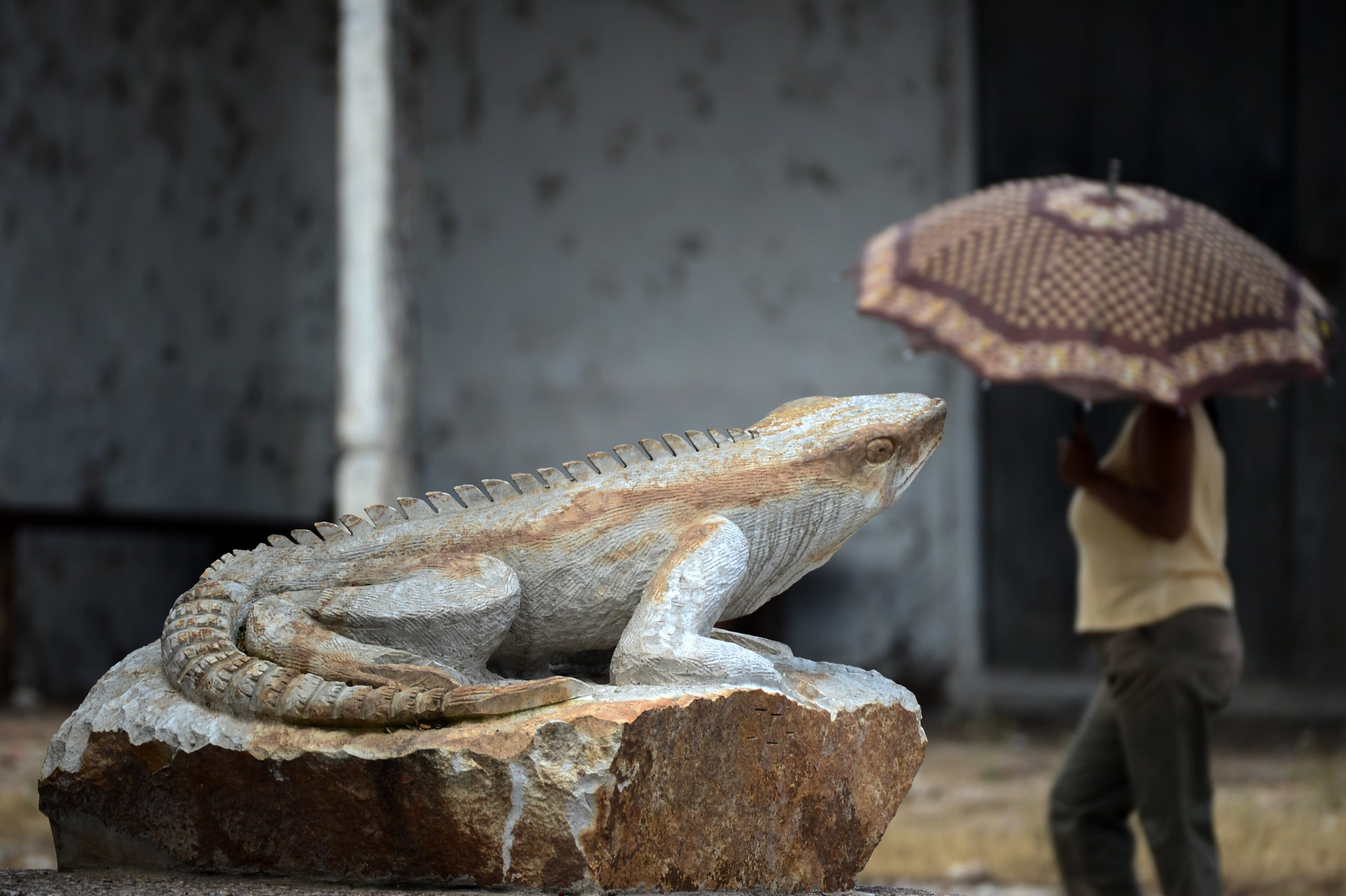 A sculpture of an iguana is seen in the municipality of Cantarranas, Francisco Morazan Department, 30 km northwest of Tegucigalpa, on October 6, 2020, amid the COVID-19 novel coronavirus pandemic. (Photo by Orlando SIERRA / AFP) (Photo by ORLANDO SIERRA/AFP via Getty Images)