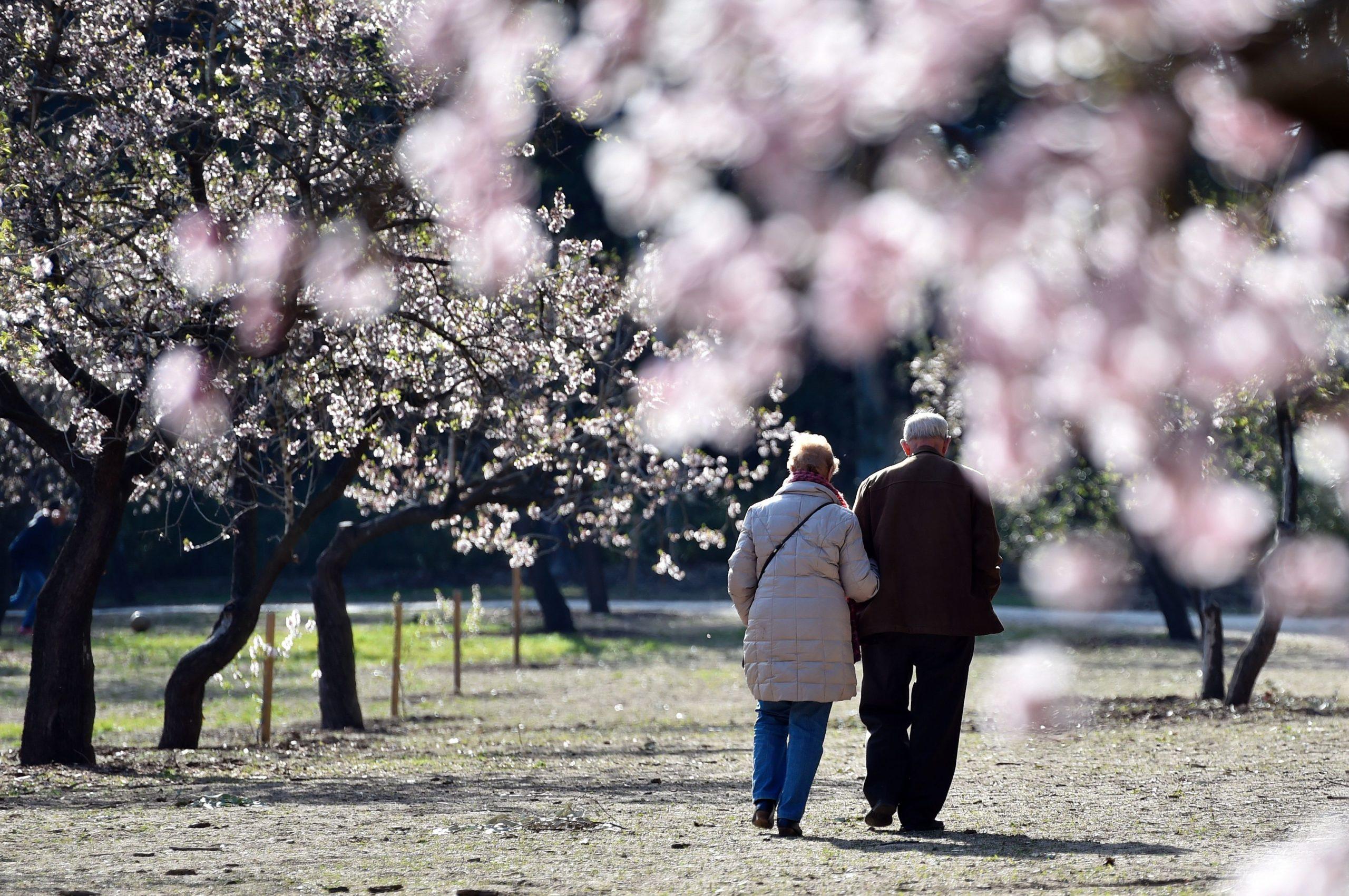 An elderly couple walks under blossoming almond trees at El Parque de Los Quintos in Madrid on March 12, 2016. / AFP / GERARD JULIEN (Photo credit should read GERARD JULIEN/AFP via Getty Images)