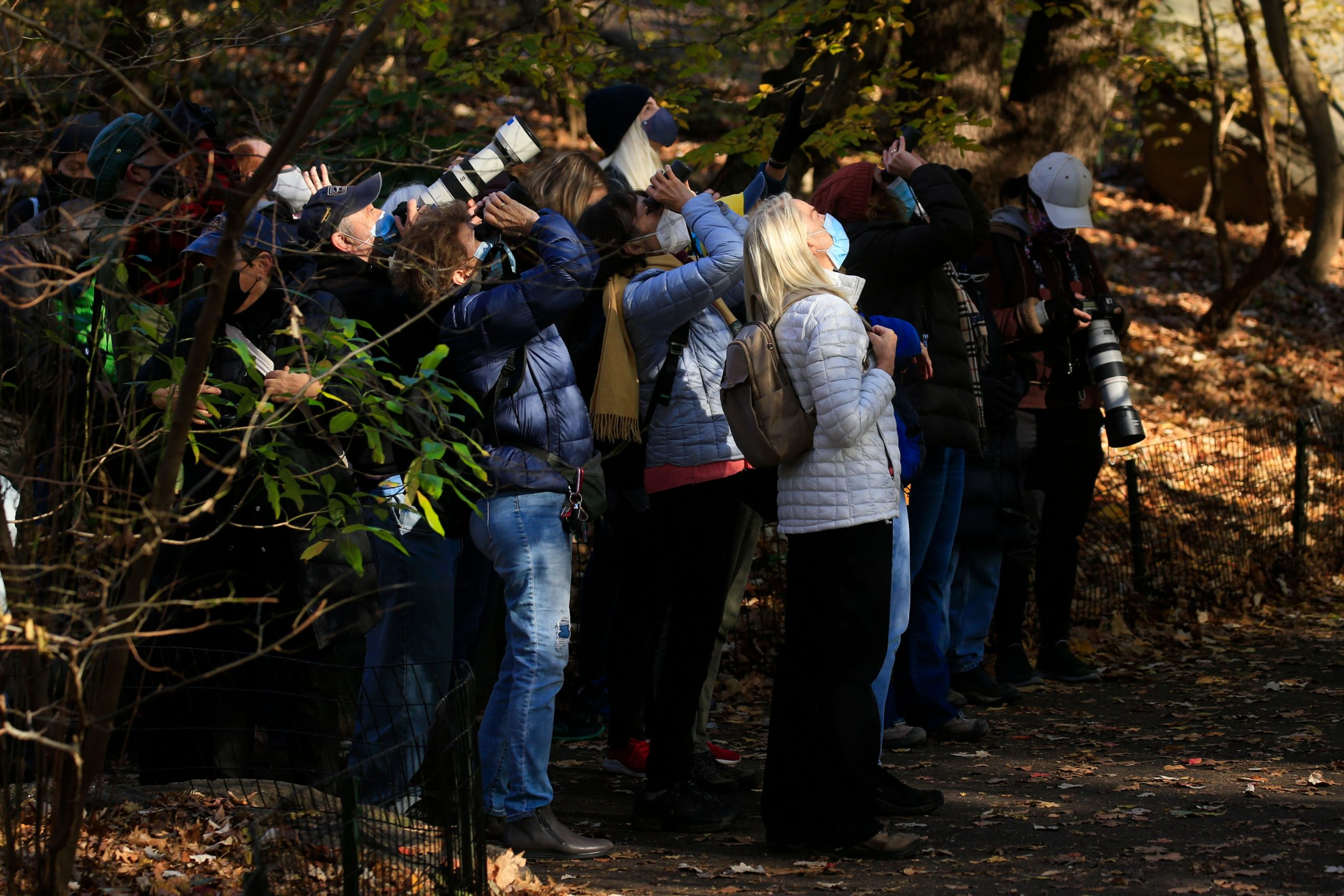 Bird watchers use binoculars and cameras to see a Great Horned Owl in Central Park, New York on Nov. 29. (Kena Betancur/AFP via Getty Images)