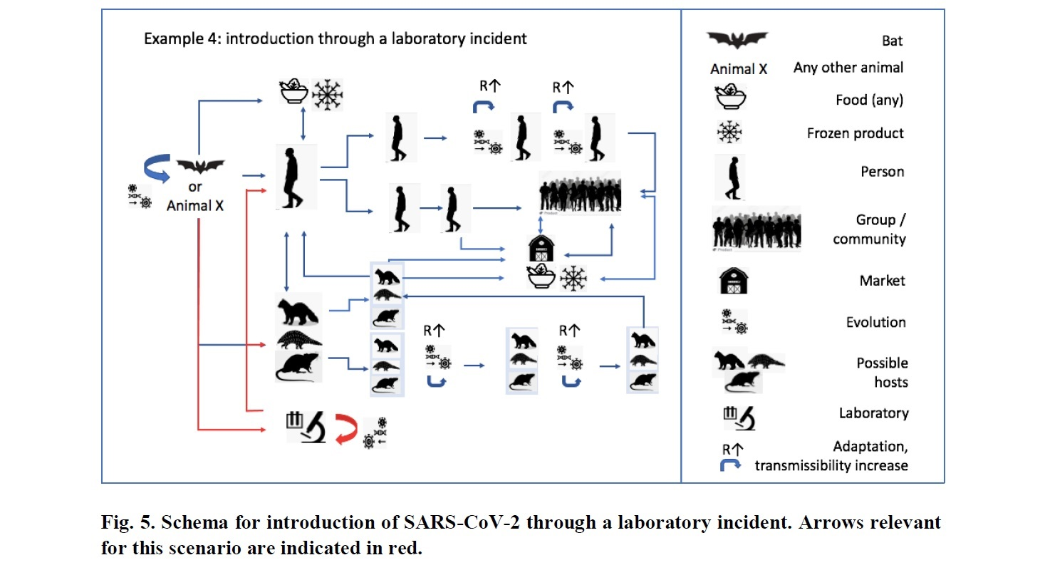p.119 chart of WHO-convened Global Study of the Origins of SARS-CoV-2