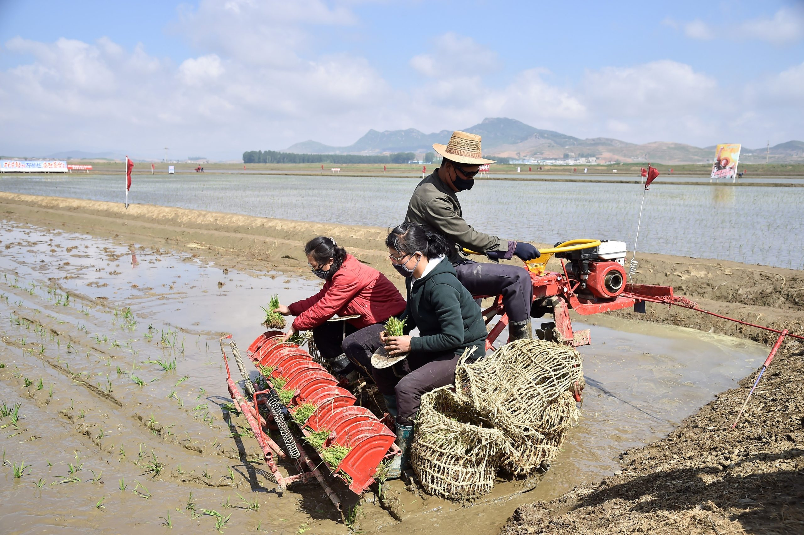Workers plant rice at the Chongsan Cooperative Farm in the Kangso district of Nampho City on May 12, 2020. (Photo by KIM Won Jin / AFP) (Photo by KIM WON JIN/AFP via Getty Images)