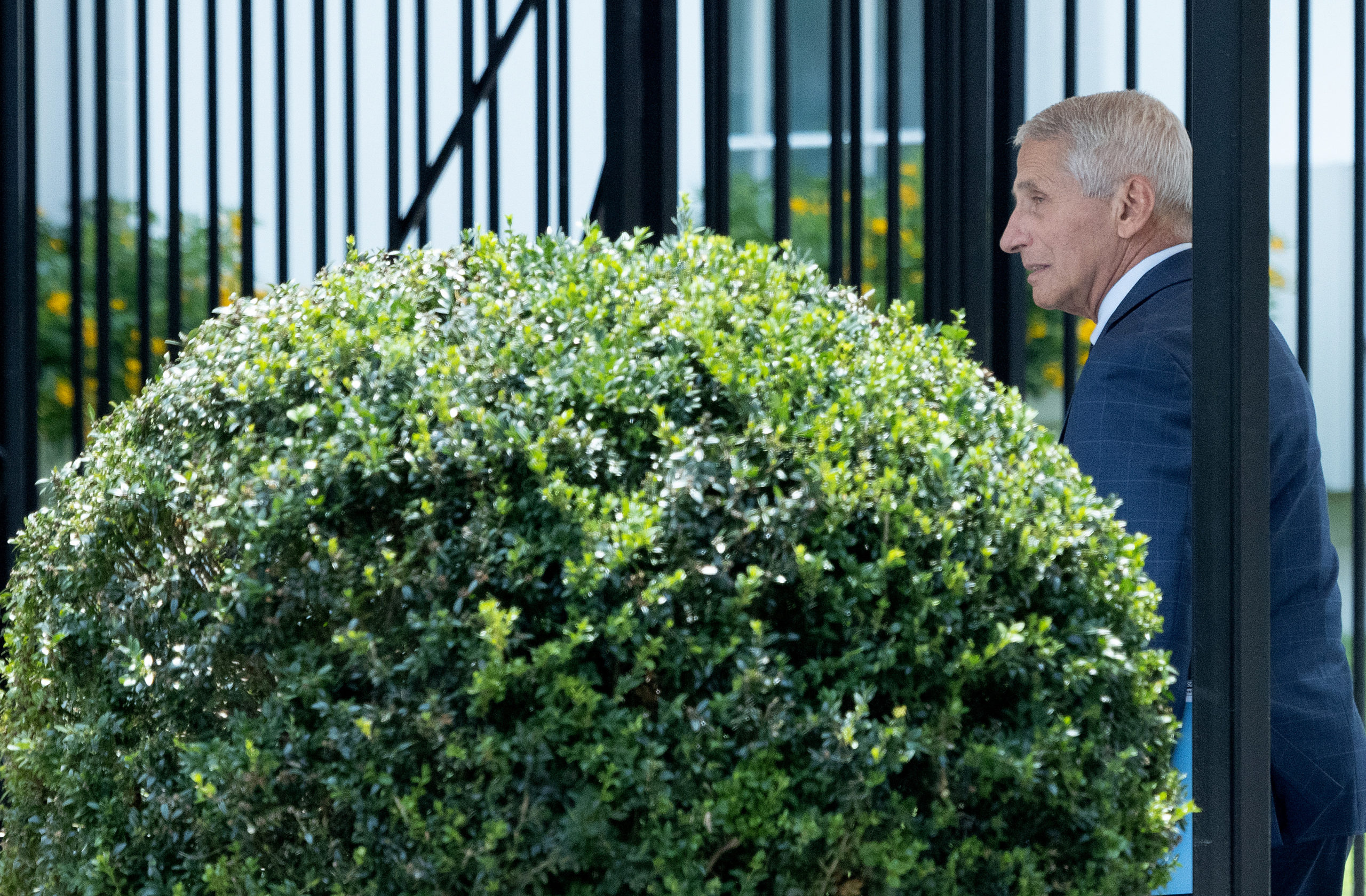 WASHINGTON, DC - JULY 22: Dr. Anthony Fauci, chief medical advisor to the President, arrives at the White House on July 22, 2021 in Washington, DC. The United States continues to see an increase in COVID-19 cases as the Delta variant accounts for a larger share of new cases. (Photo by Win McNamee/Getty Images)