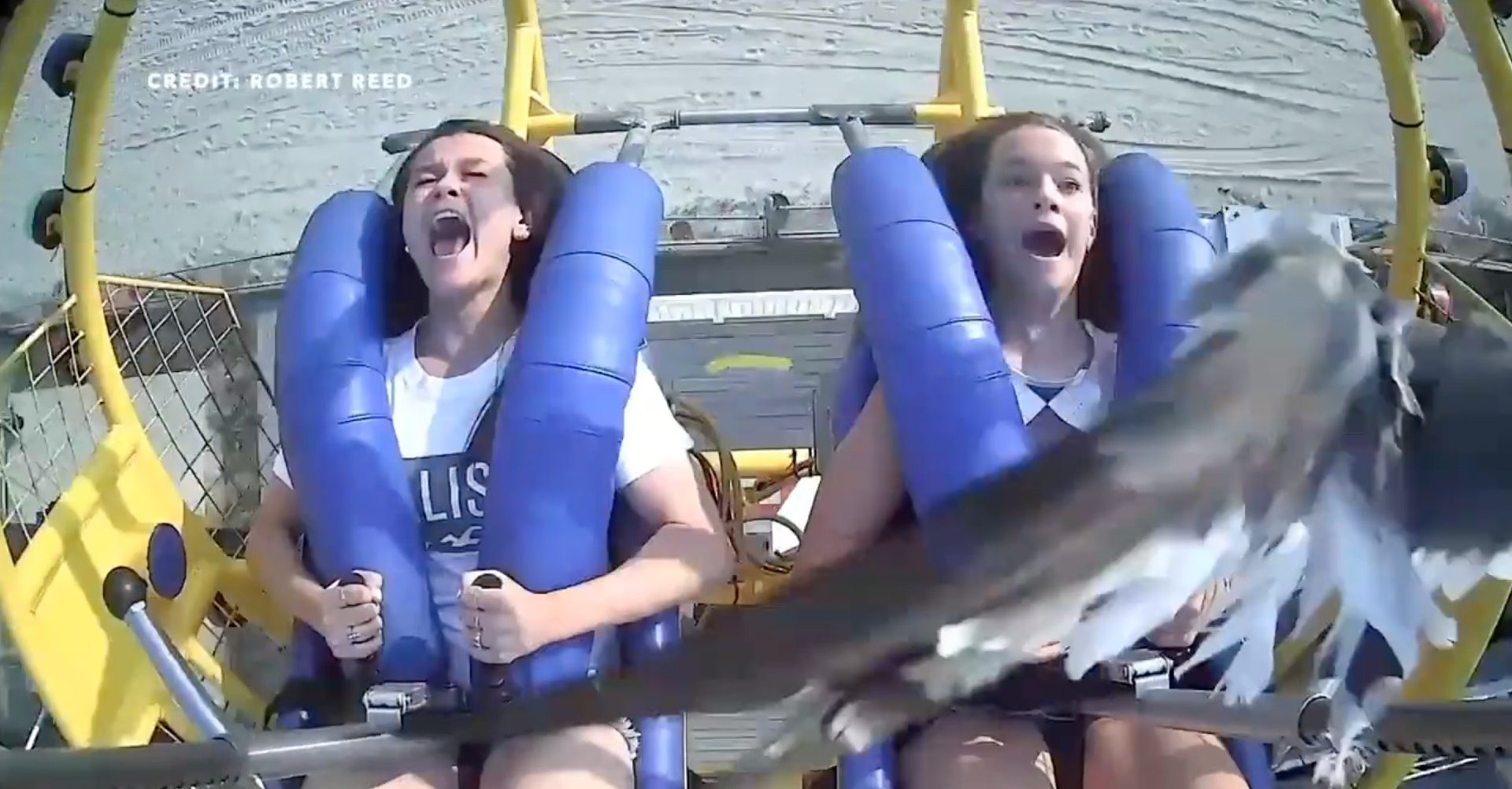 Seagull flies face first into girl on ride at New Jersey amusement park. (Screenshot/Twitter/Public — User: @barstoolsports)